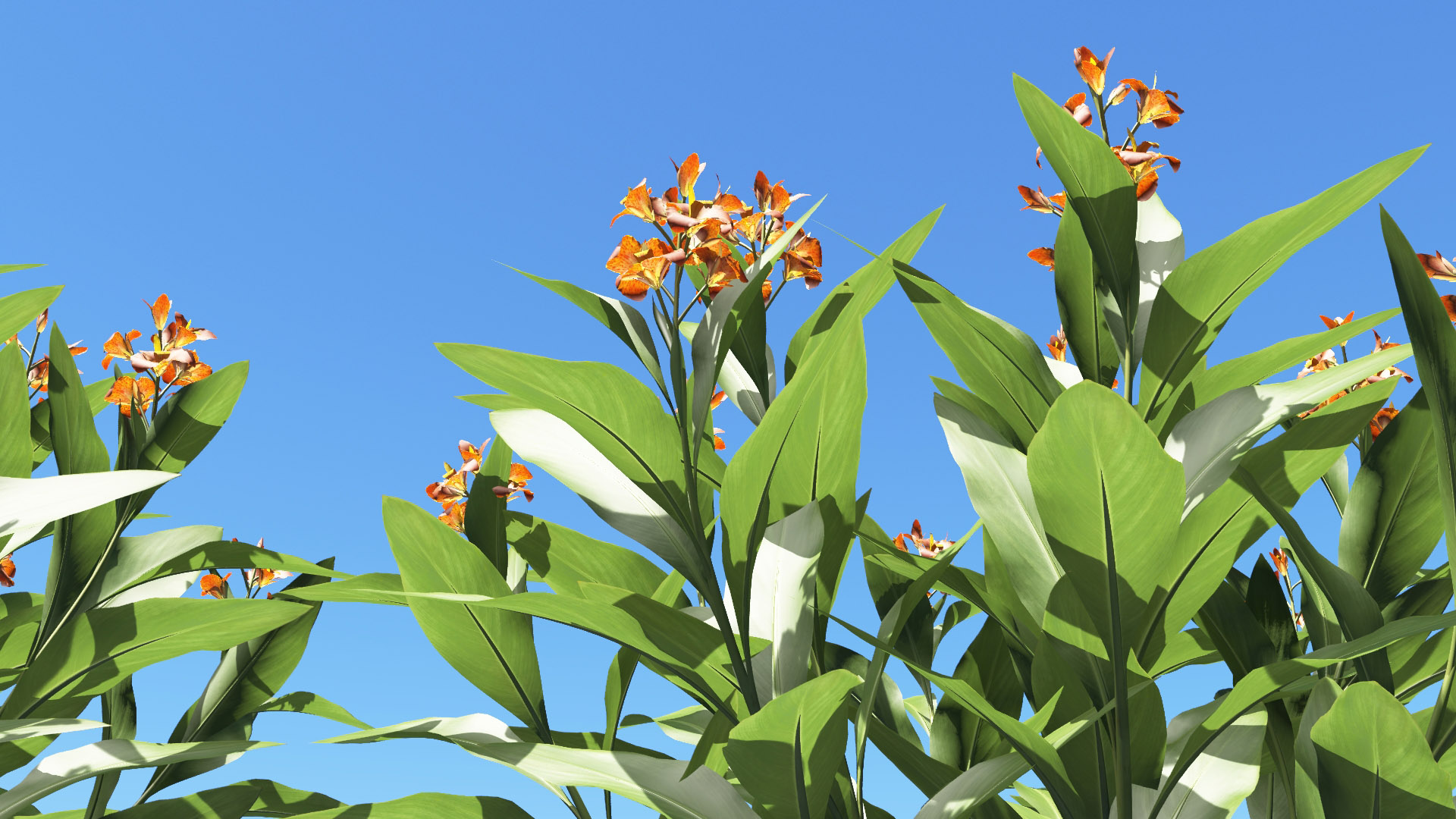 3D model of the Canna lily Canna x generalis orange close-up