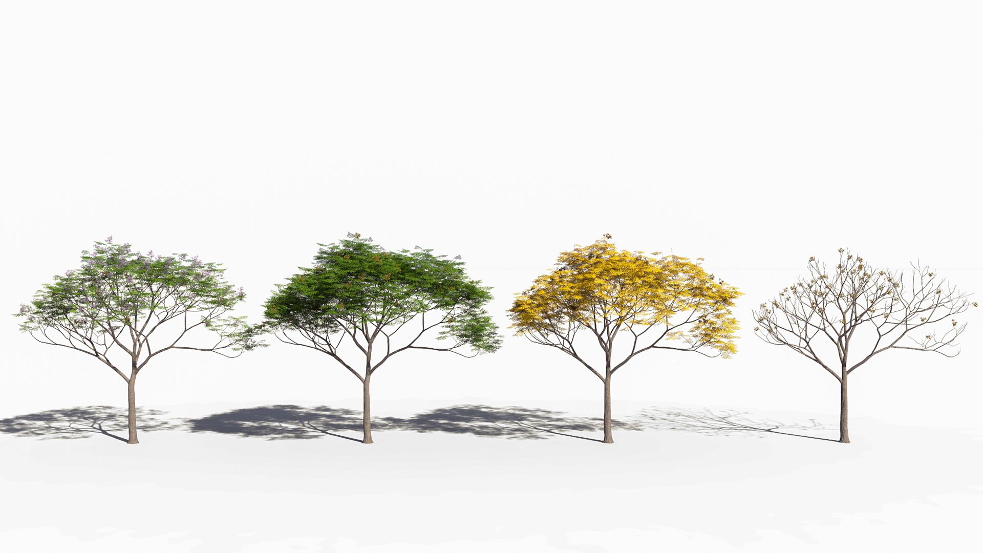 3D model of the Chinaberry tree Melia azedarach season variations