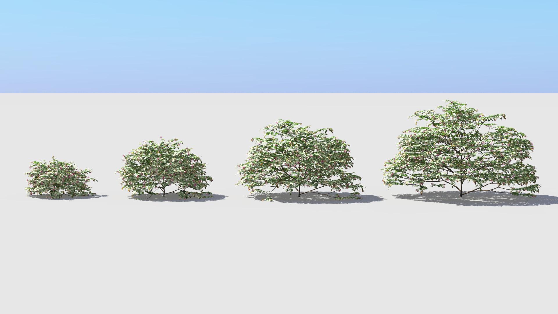 3D model of the Chinese fringe flower Loropetalum chinense var rubrum