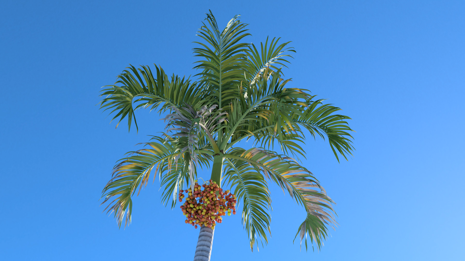 3D model of the Christmas palm Adonidia merrillii