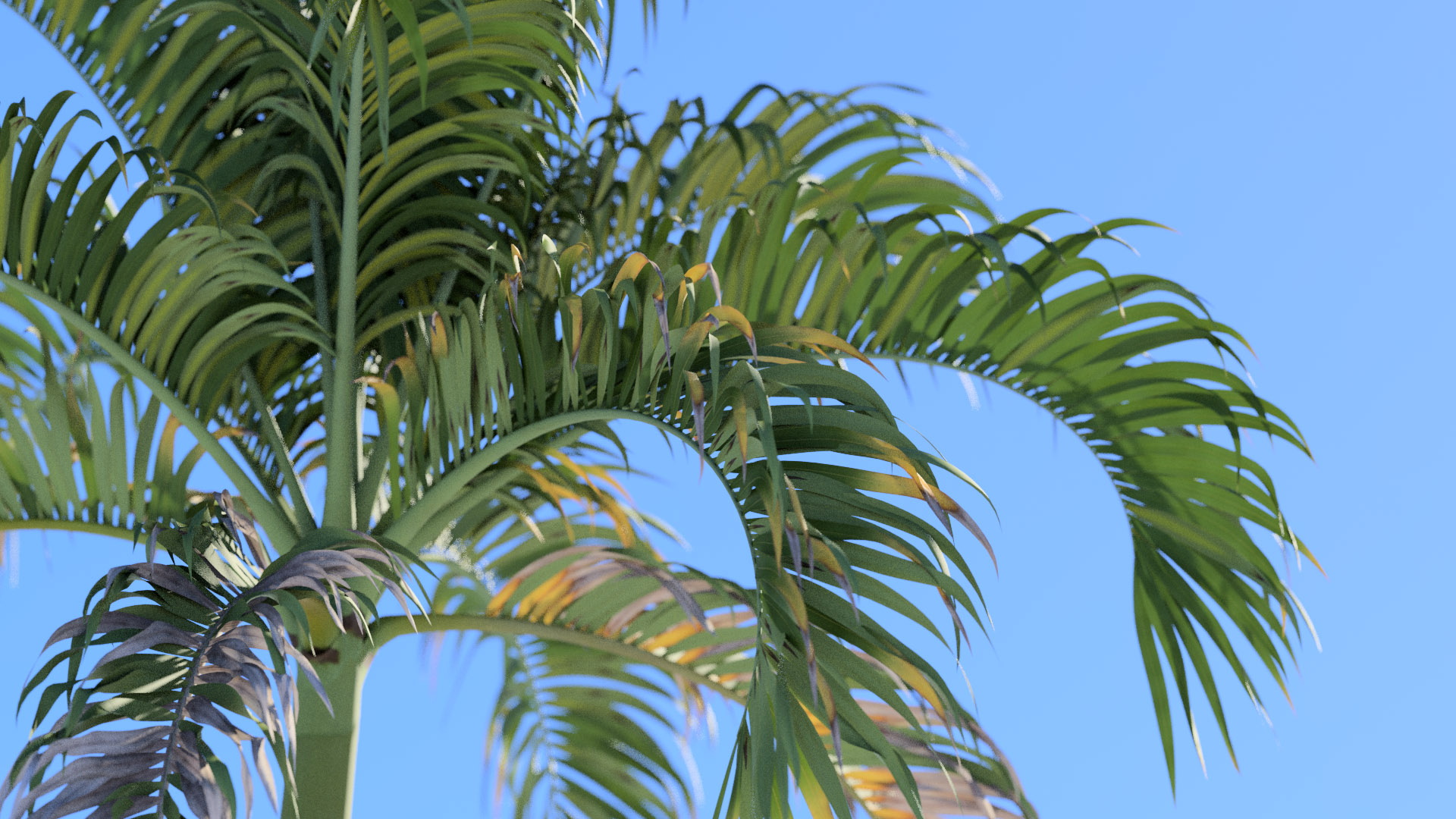 3D model of the Christmas palm Adonidia merrillii close-up