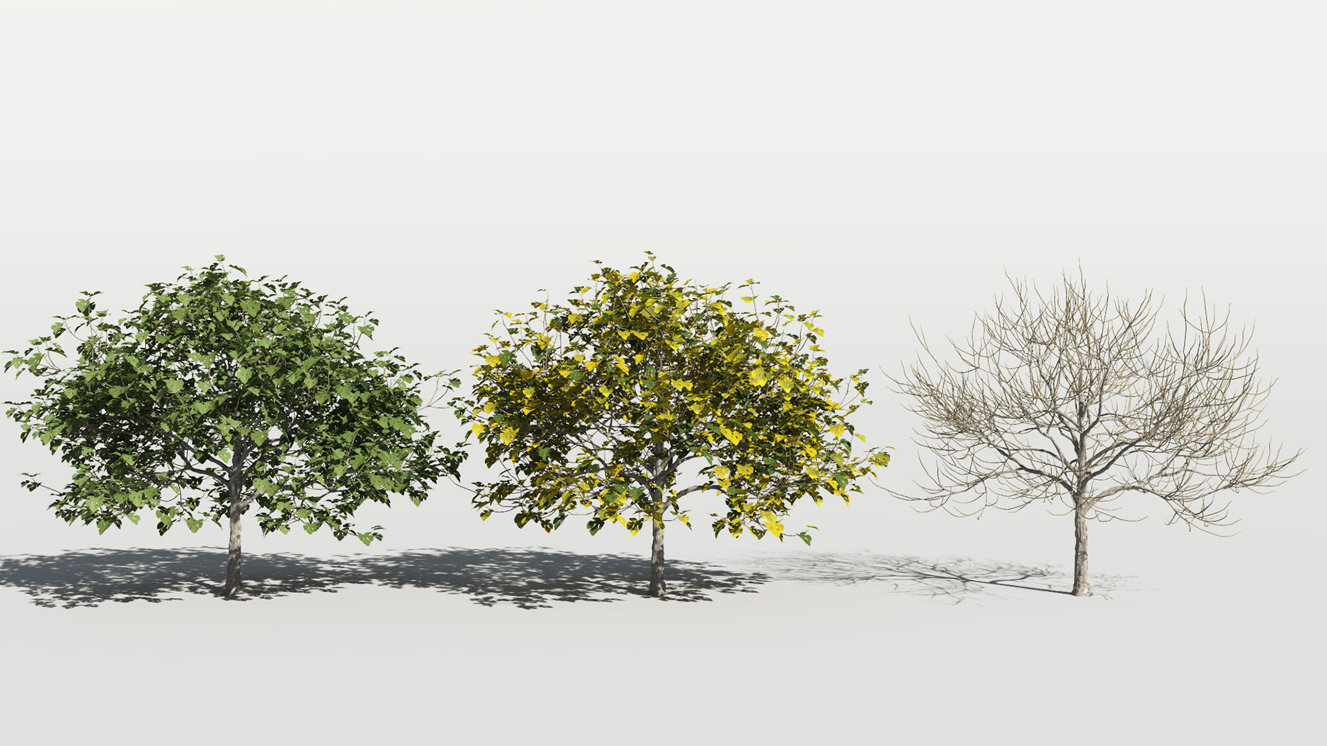 3D model of the Common fig tree Ficus carica season variations