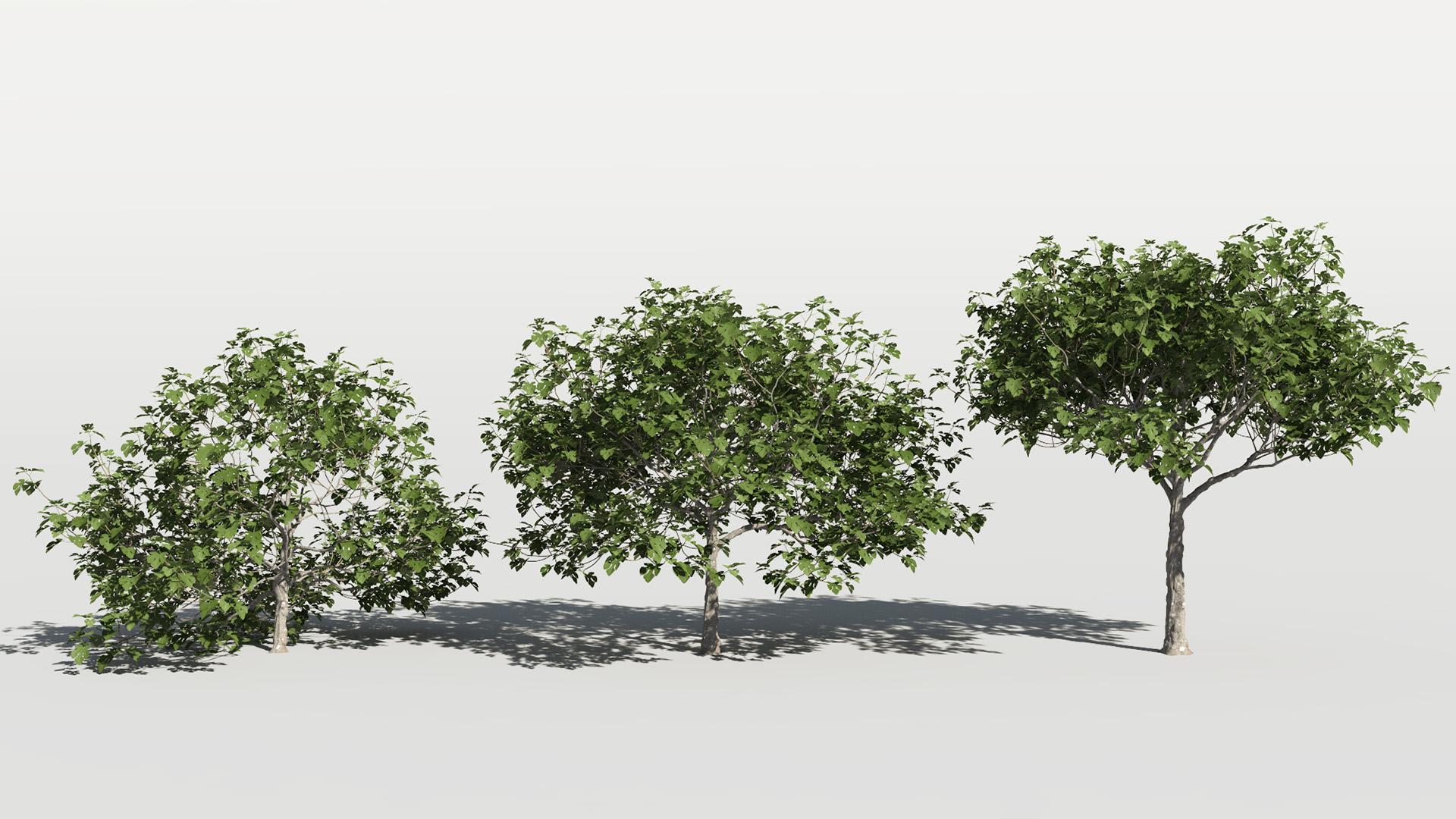 3D model of the Common fig tree Ficus carica health variations