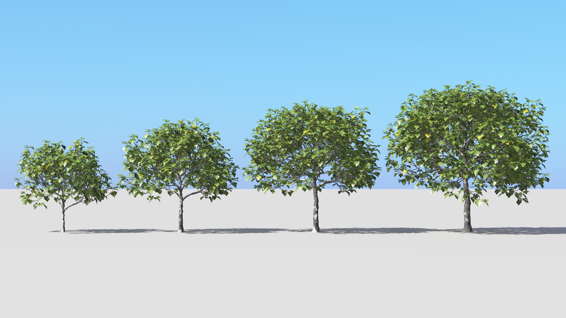 3D model of the Common fig tree Ficus carica