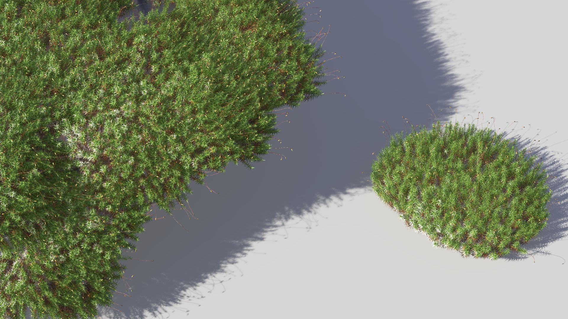 3D model of the Common haircap moss Polytrichum commune