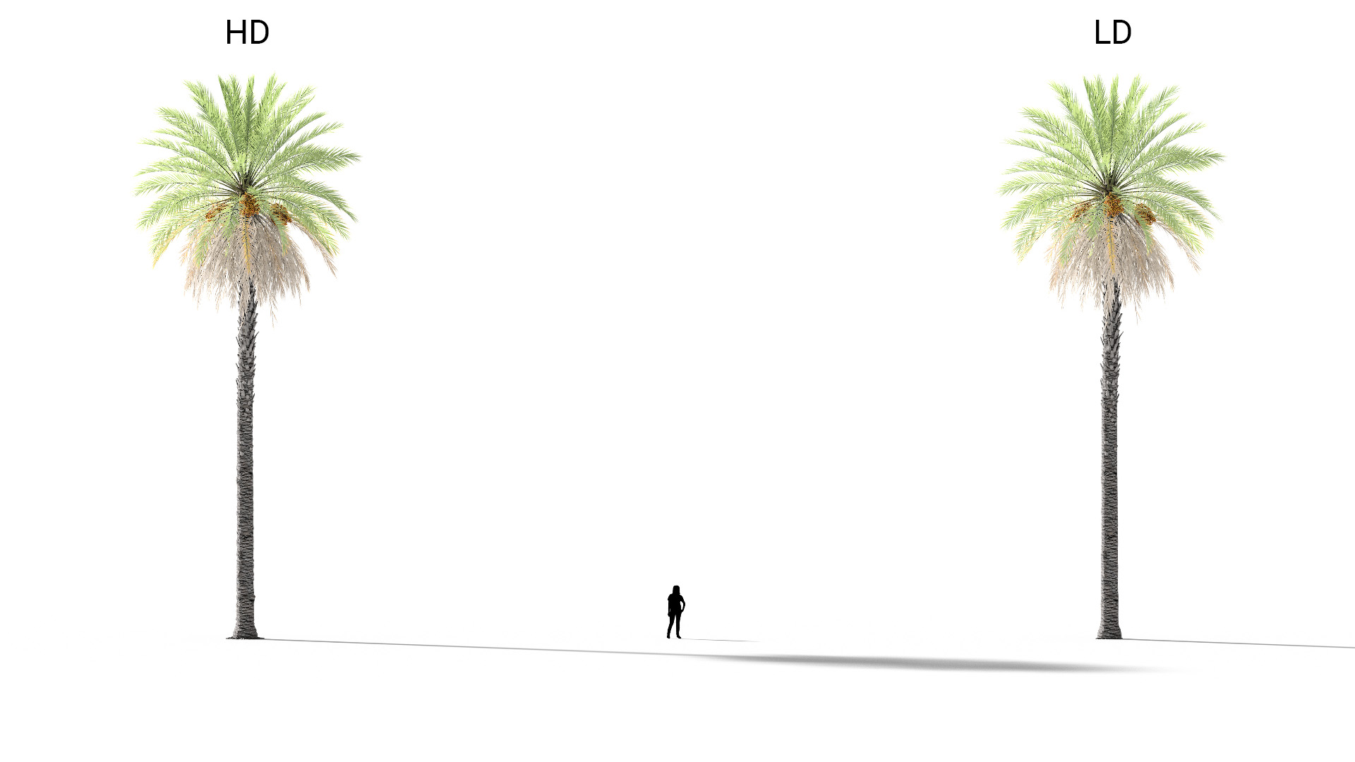 3D model of the Date palm Phoenix dactylifera included versions