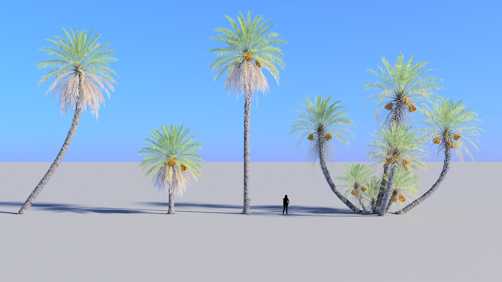 3D model of the Date palm Phoenix dactylifera