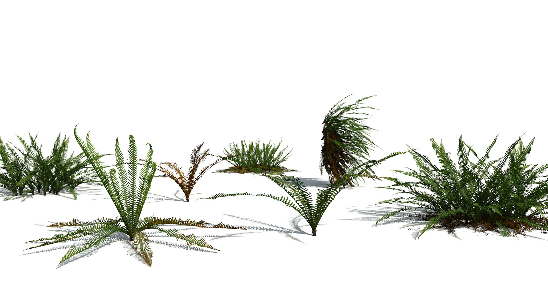 3D model of the Deer fern Blechnum spicant different presets