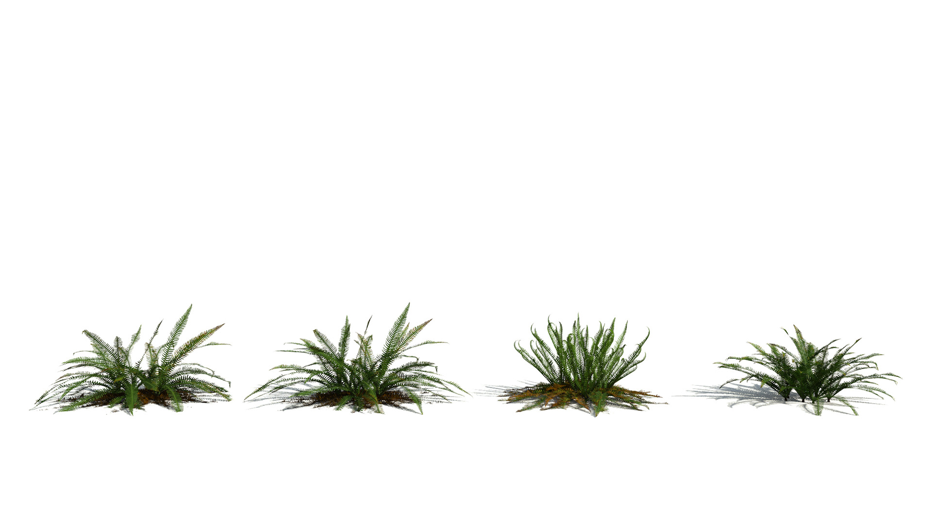 3D model of the Deer fern Blechnum spicant season variations