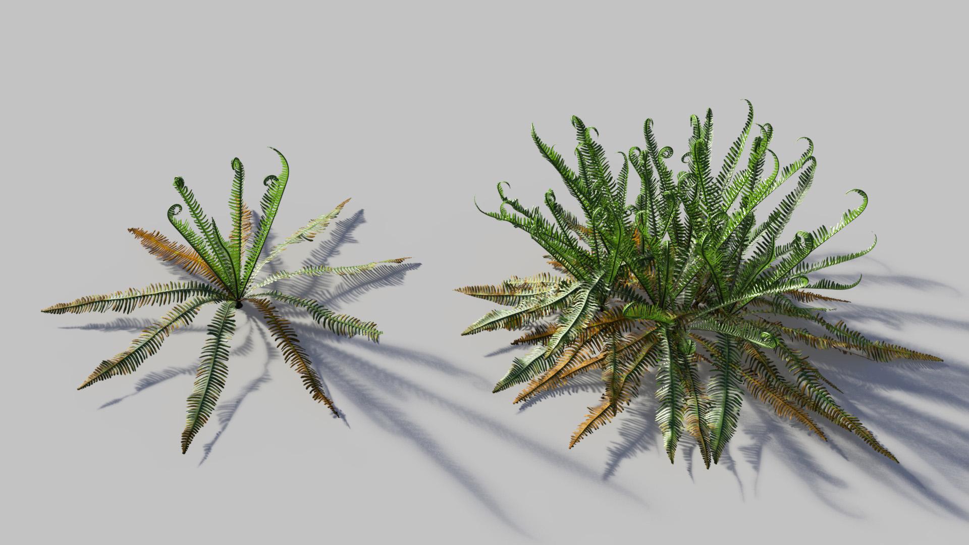 3D model of the Deer fern Blechnum spicant