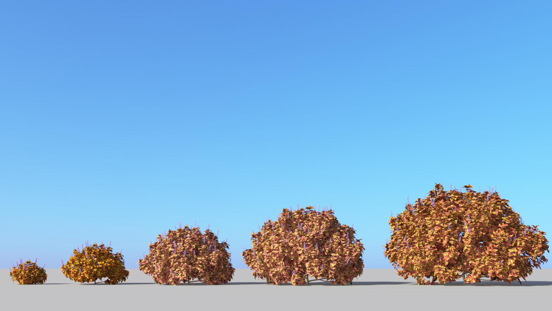 3D model of the Fairway Mosaic coleus Plectranthus scutellarioides