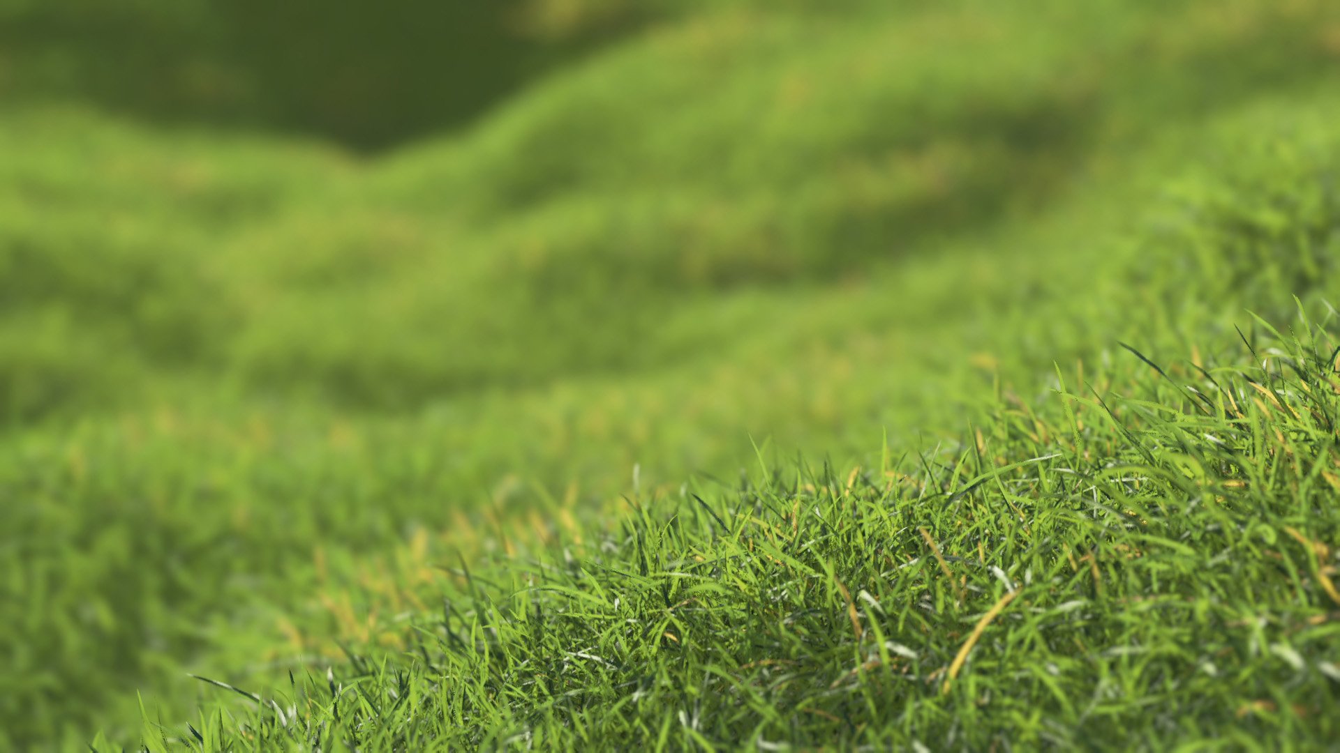 3D model of the Generic grass and lawn engine Generic grass lawn close-up