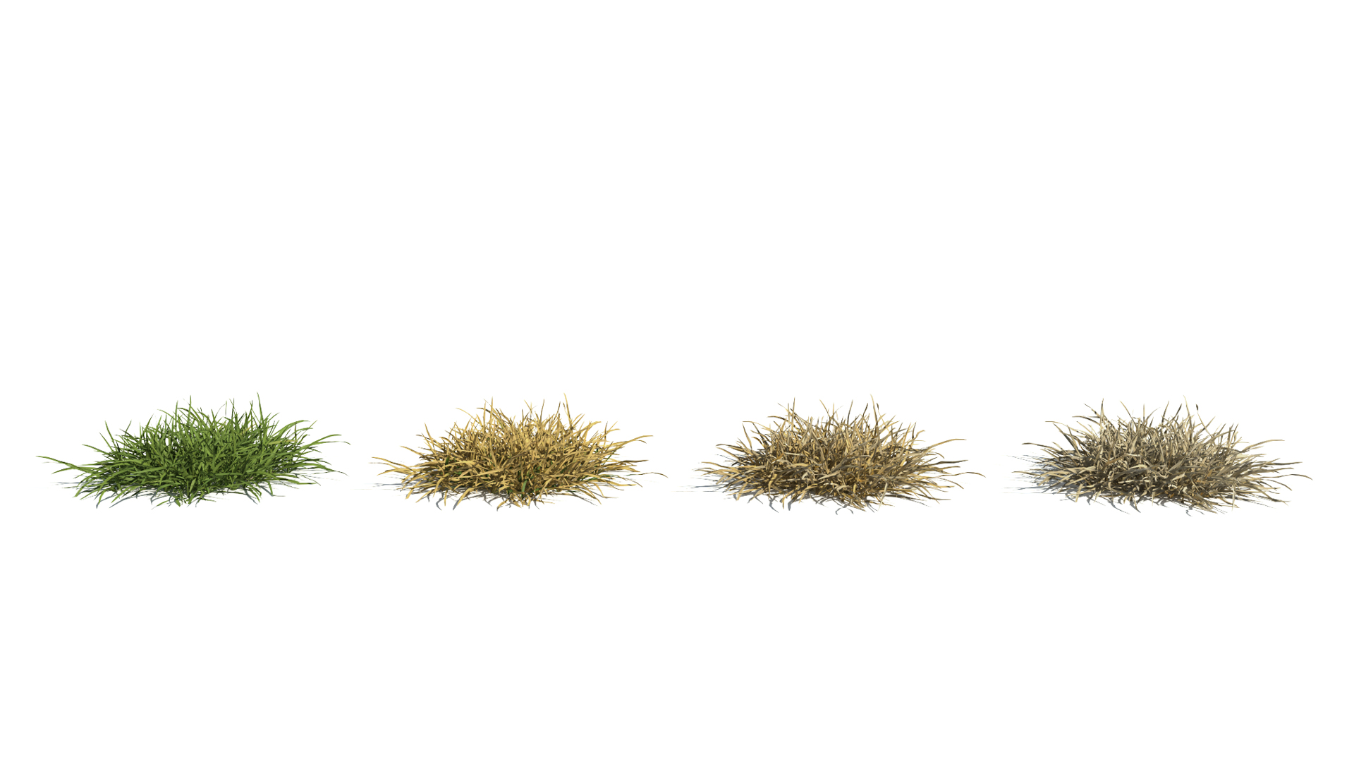 3D model of the Generic grass and lawn engine Generic grass lawn health variations