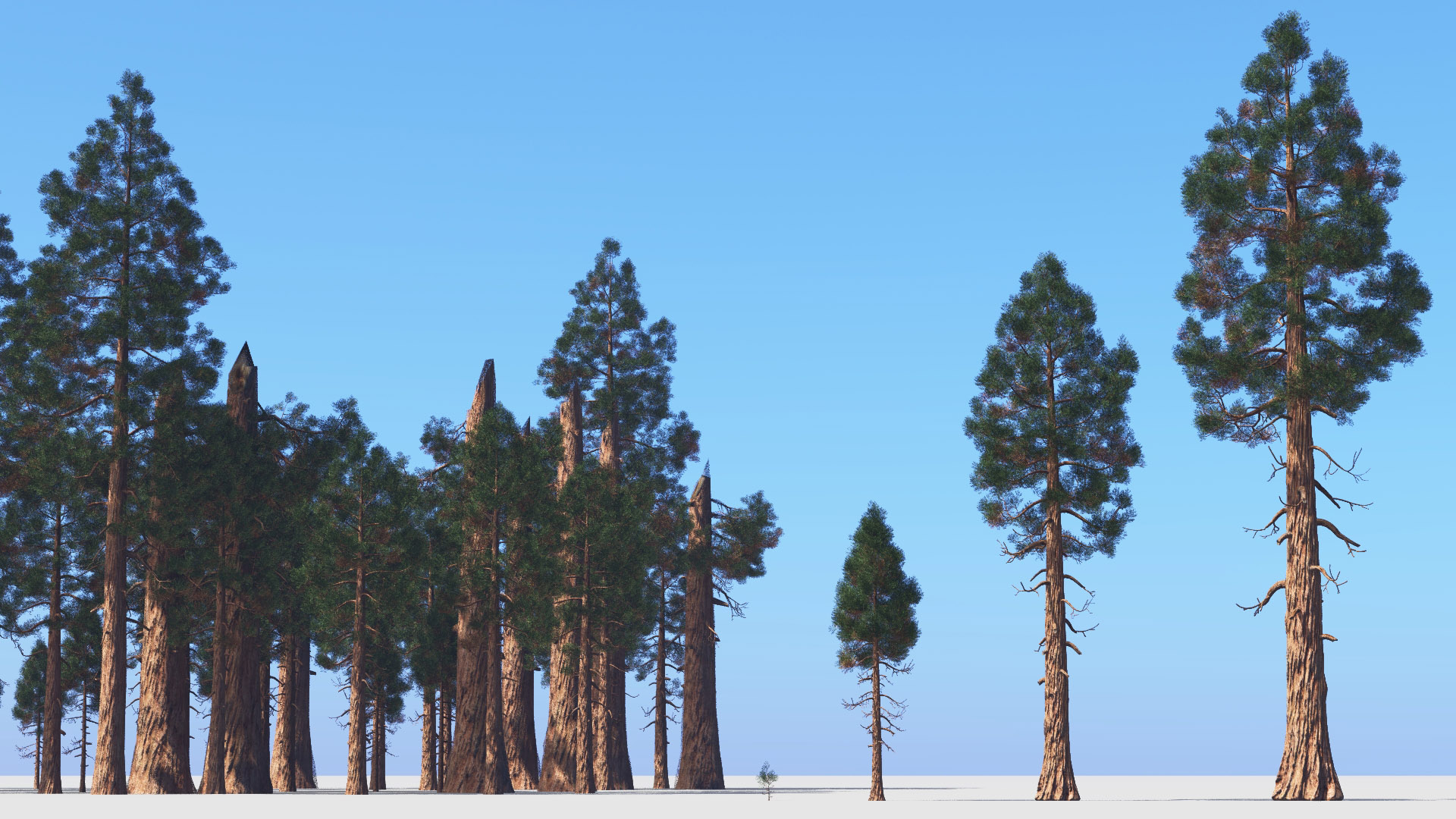 3D model of the Giant sequoia Sequoiadendron giganteum