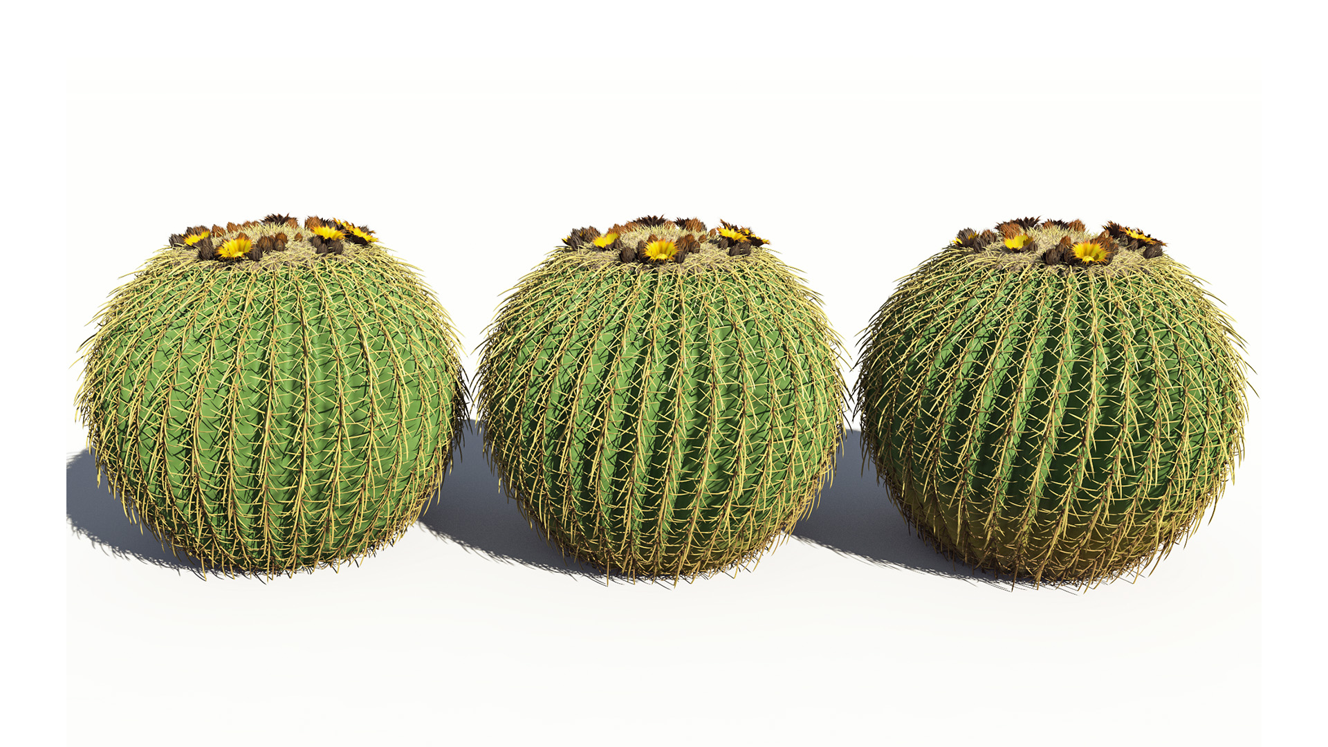 3D model of the Golden barrel cactus Echinocactus grusonii health variations
