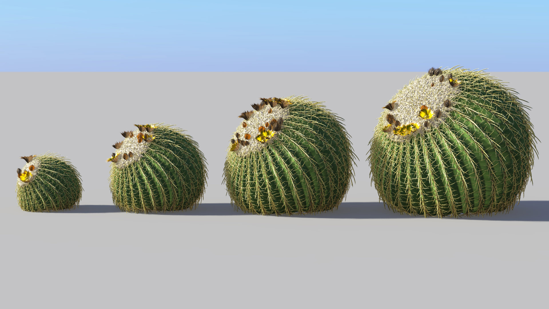 3D model of the Golden barrel cactus Echinocactus grusonii