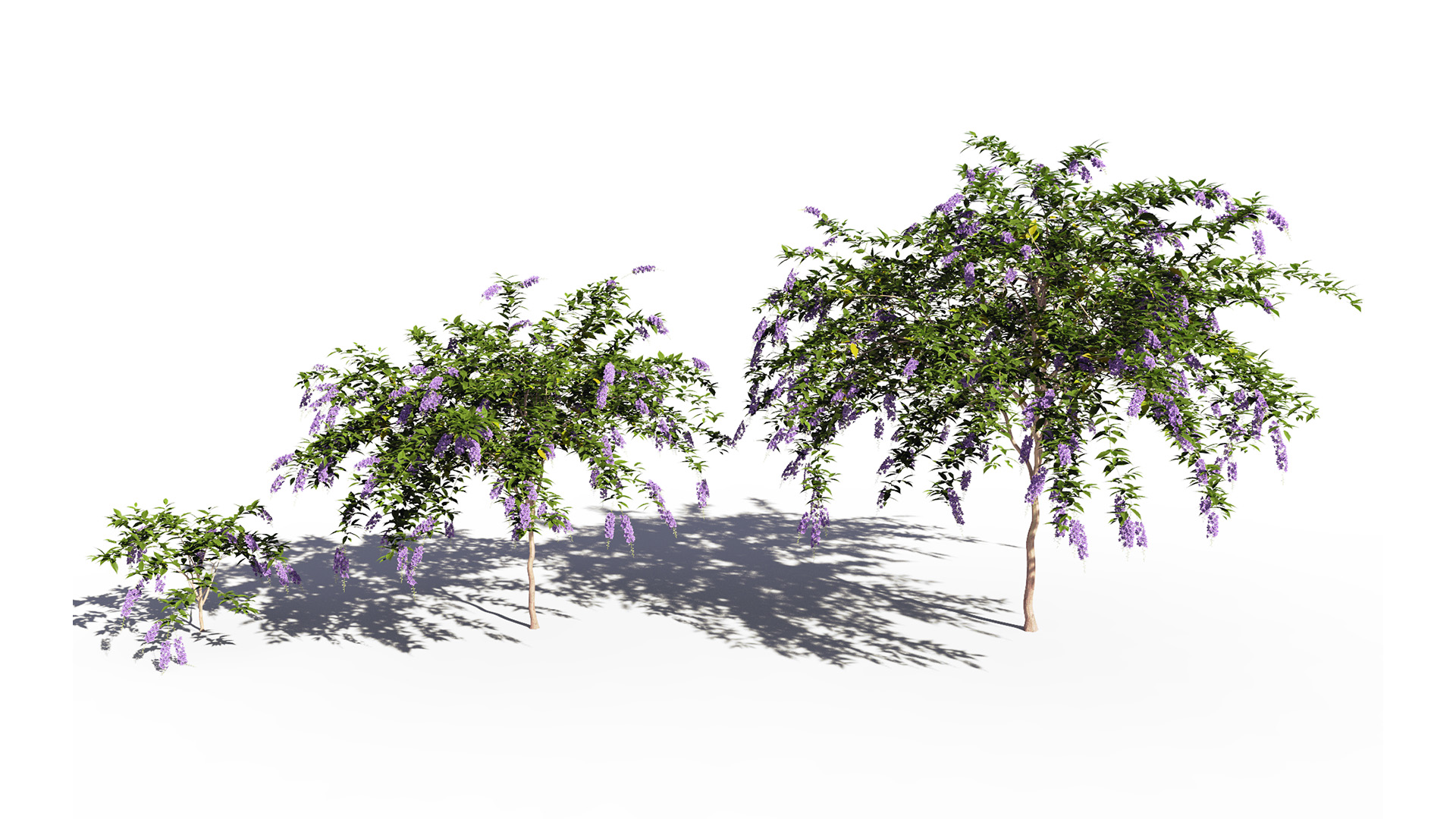 3D model of the Golden dewberry Duranta repens different presets