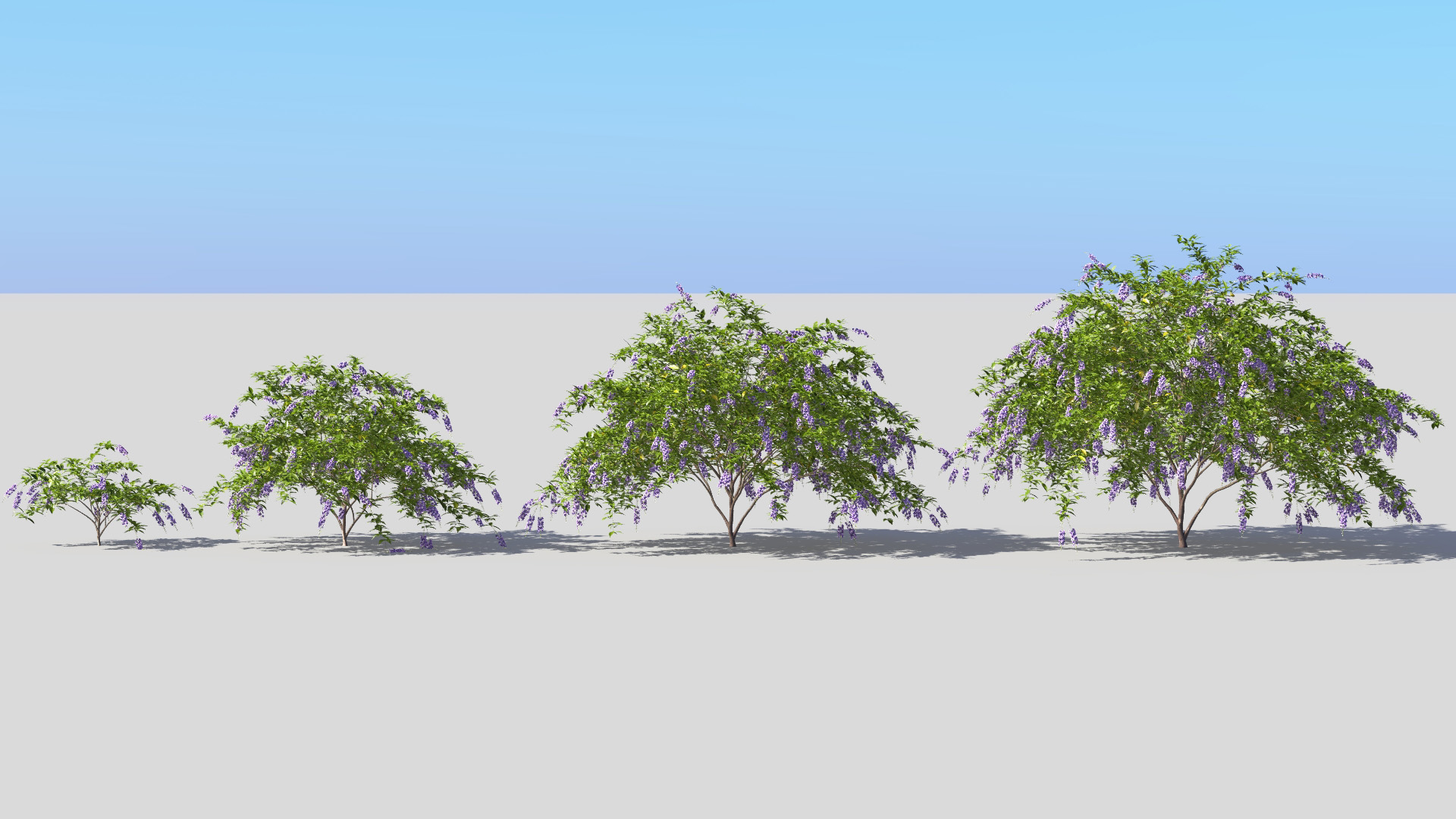 3D model of the Golden dewberry Duranta repens