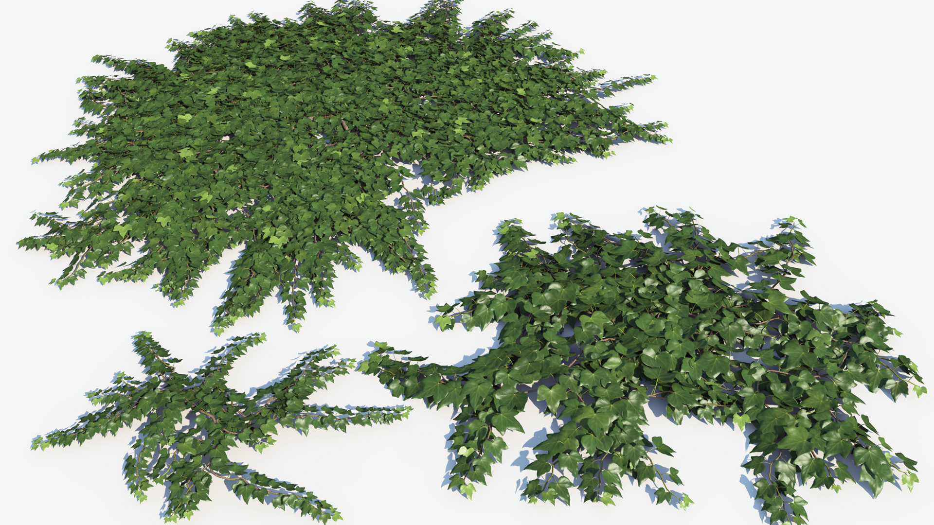 3D model of the Green ivy ground cover Hedera helix ground cover green