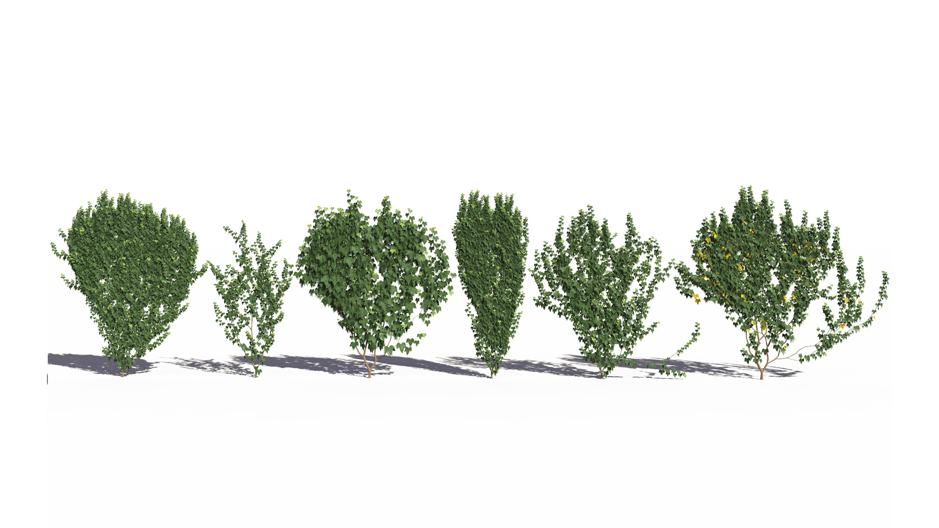 3D model of the Green ivy wall climber Hedera helix wall climber green different presets