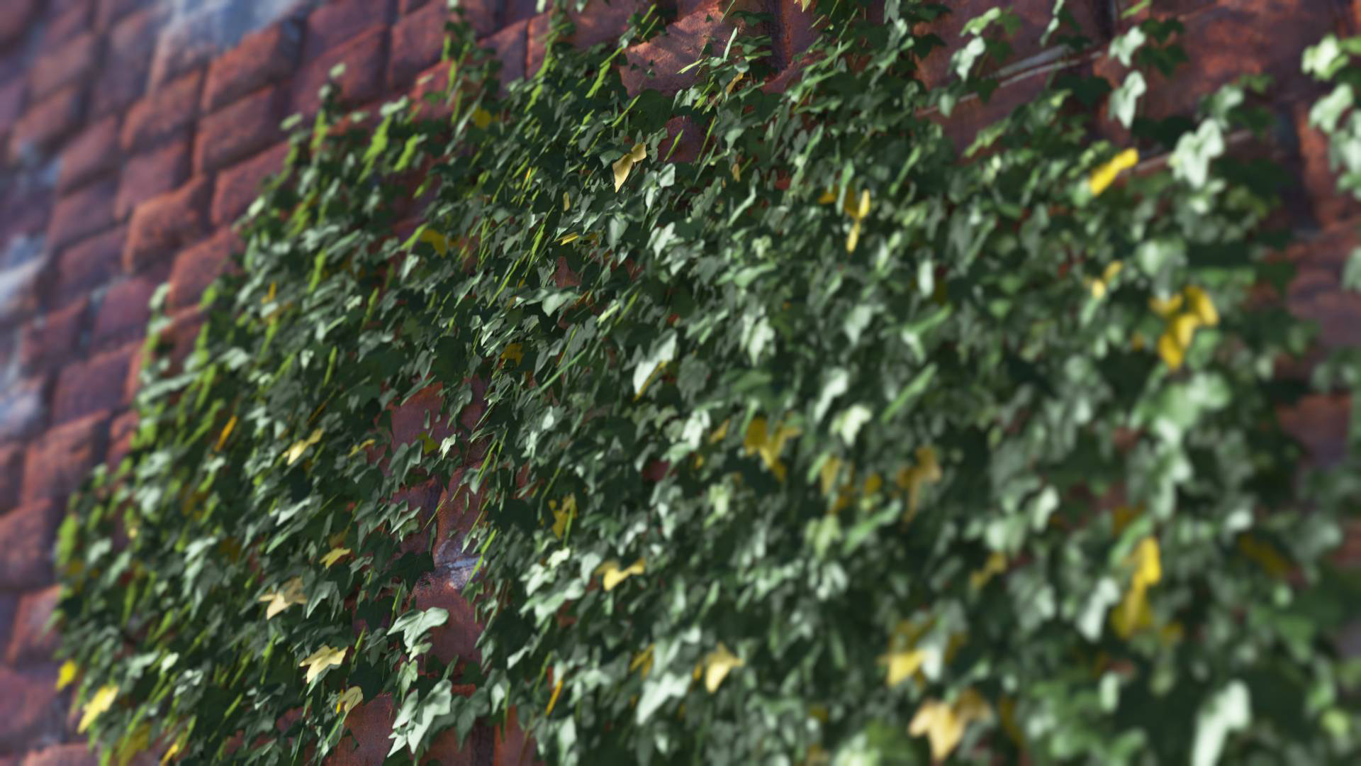 3D model of the Green ivy wall climber Hedera helix wall climber green close-up