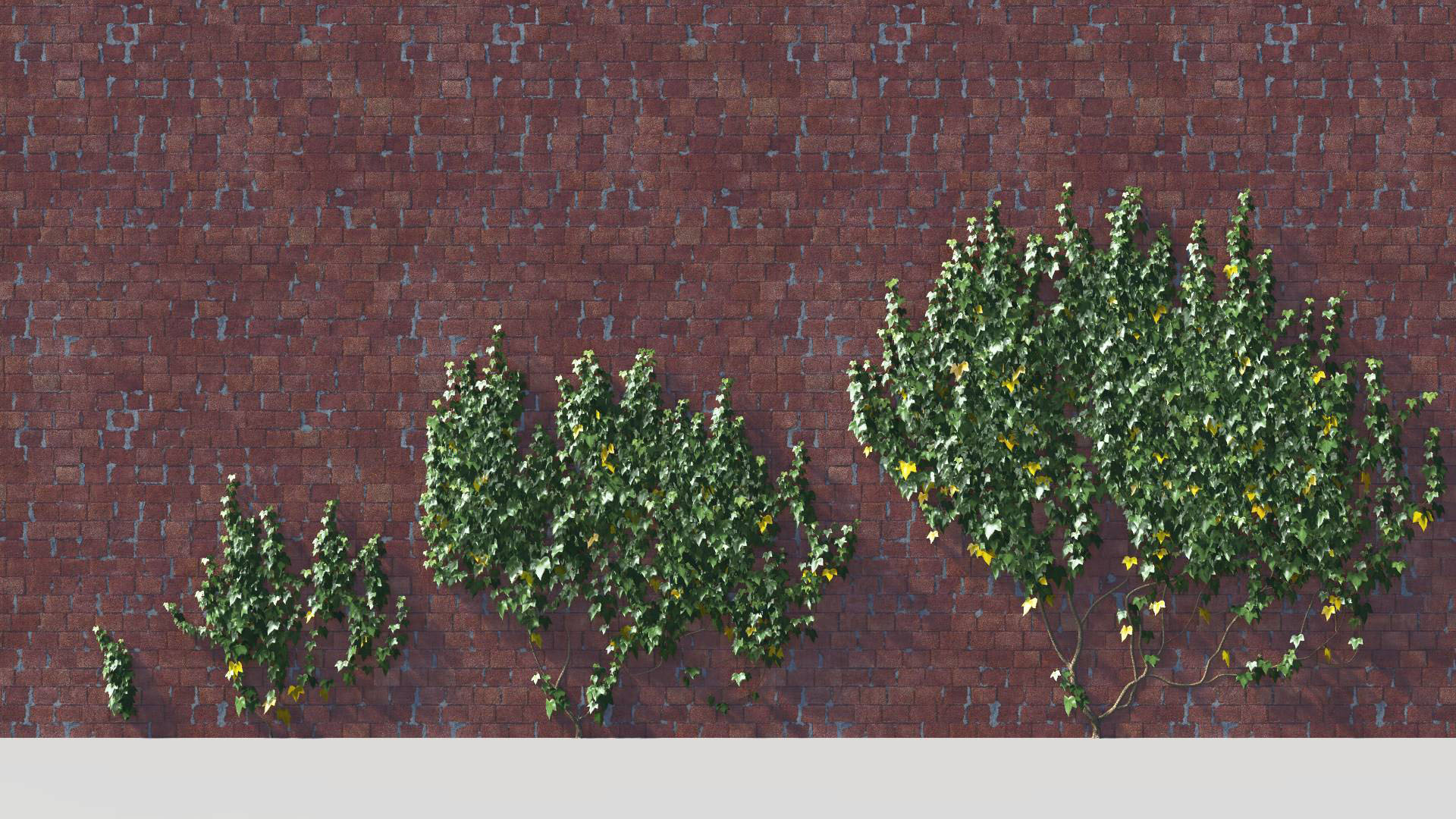 3D model of the Green ivy wall climber Hedera helix wall climber green