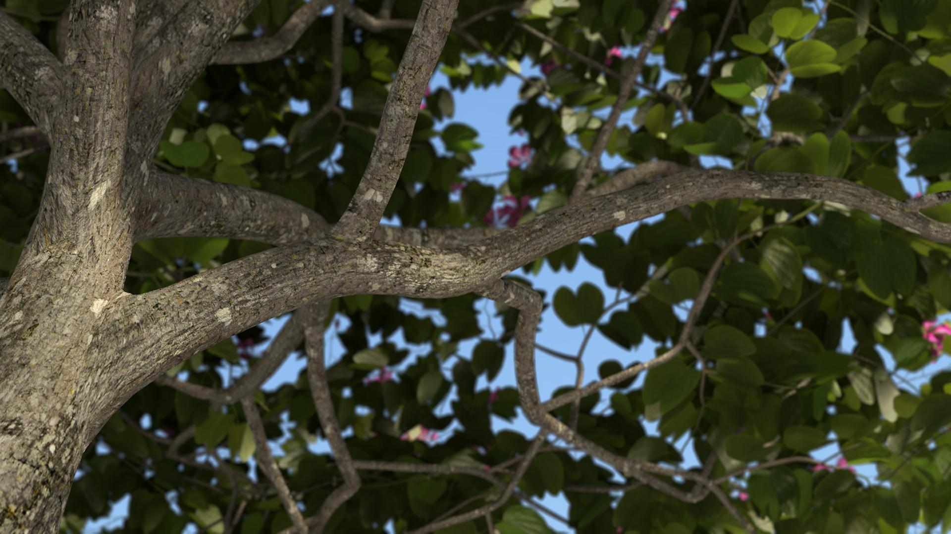 3D model of the Hong Kong orchid tree Bauhinia blakeana
