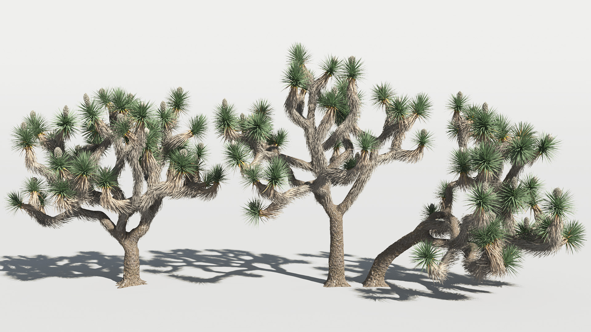 3D model of the Joshua tree Yucca brevifolia different presets