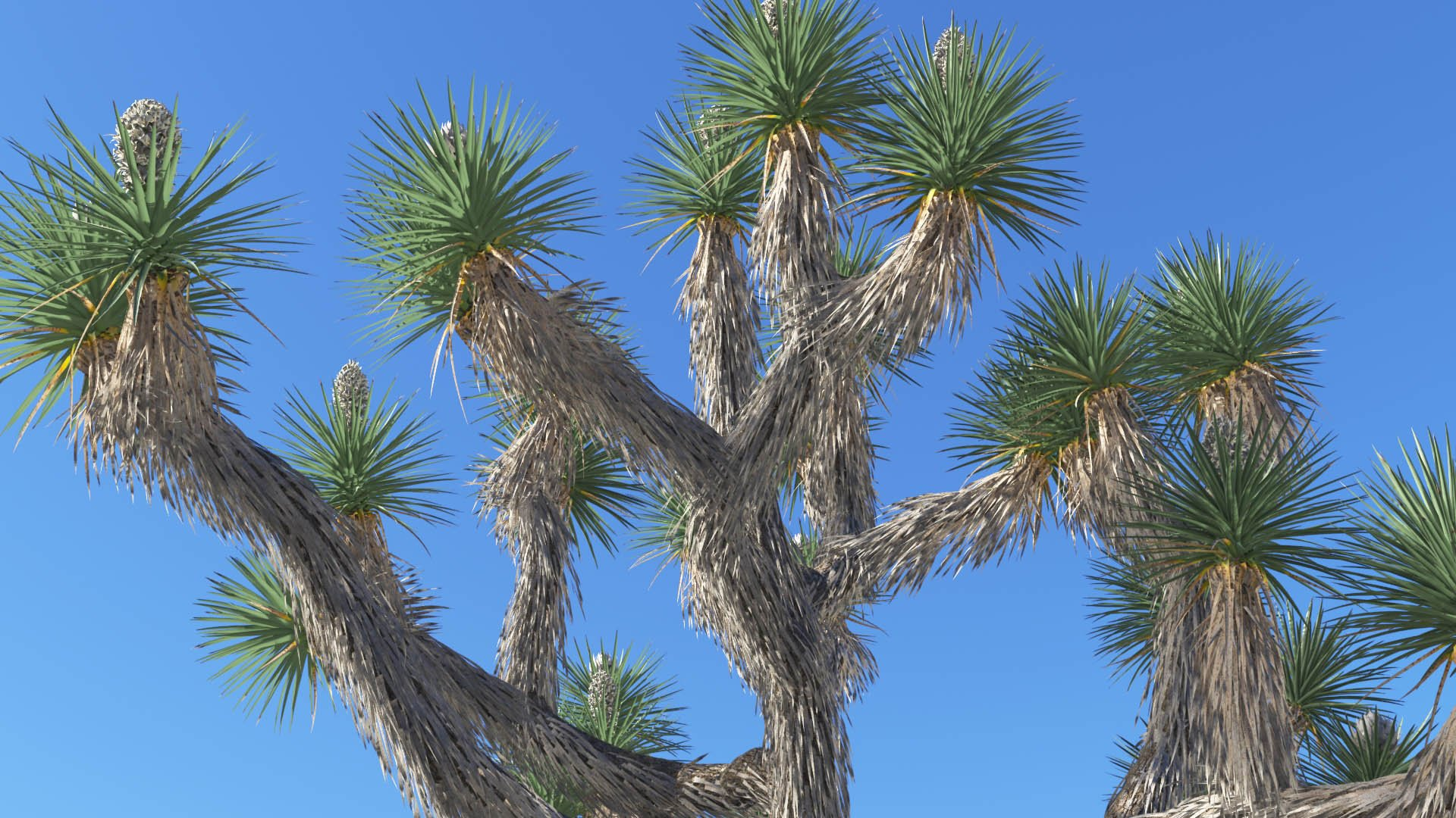 3D model of the Joshua tree Yucca brevifolia close-up