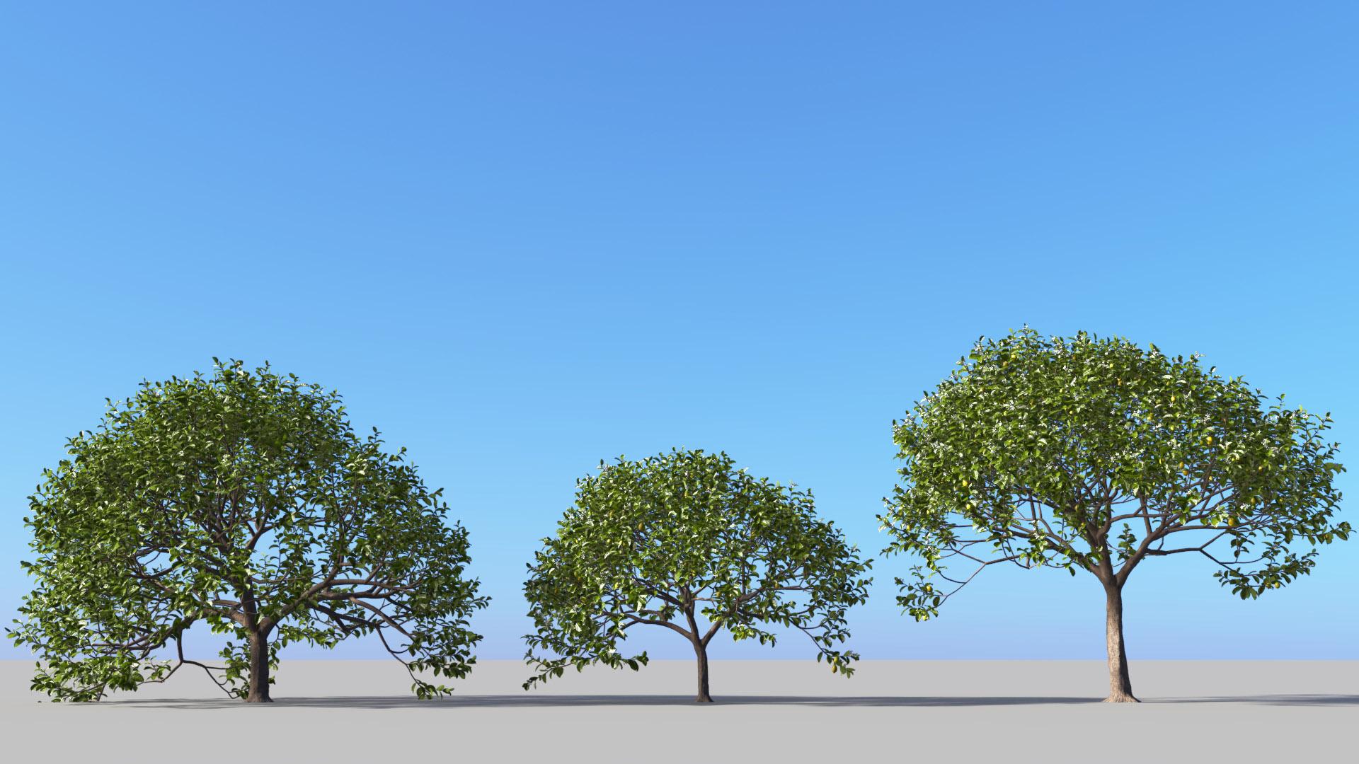 3D model of the Lemon tree Citrus x limon