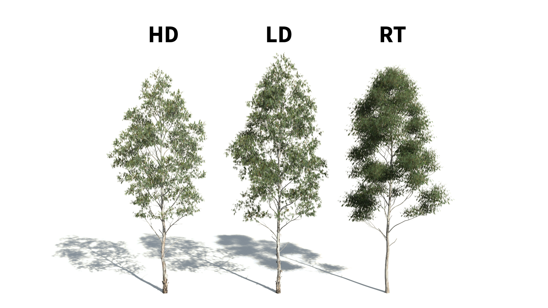 3D model of the Manna gum Eucalyptus viminalis included versions