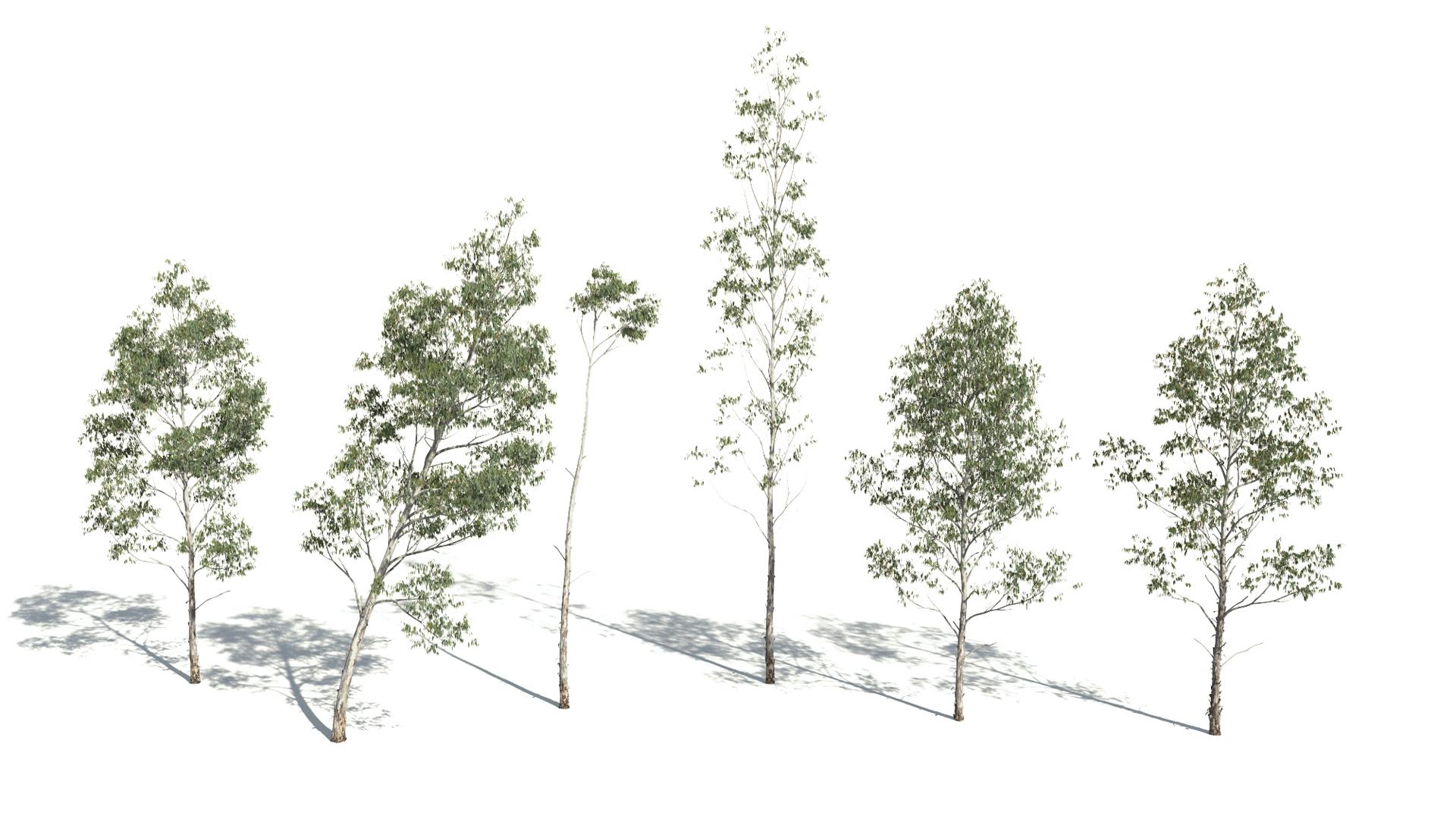 3D model of the Manna gum Eucalyptus viminalis published parameters