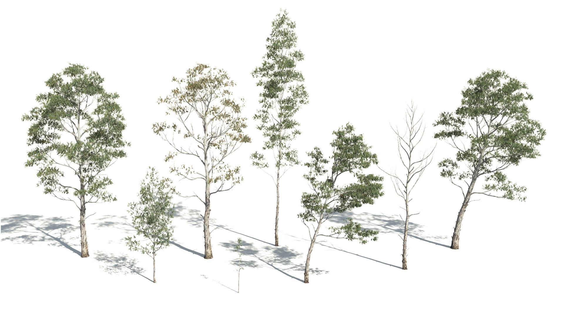 3D model of the Manna gum Eucalyptus viminalis different presets
