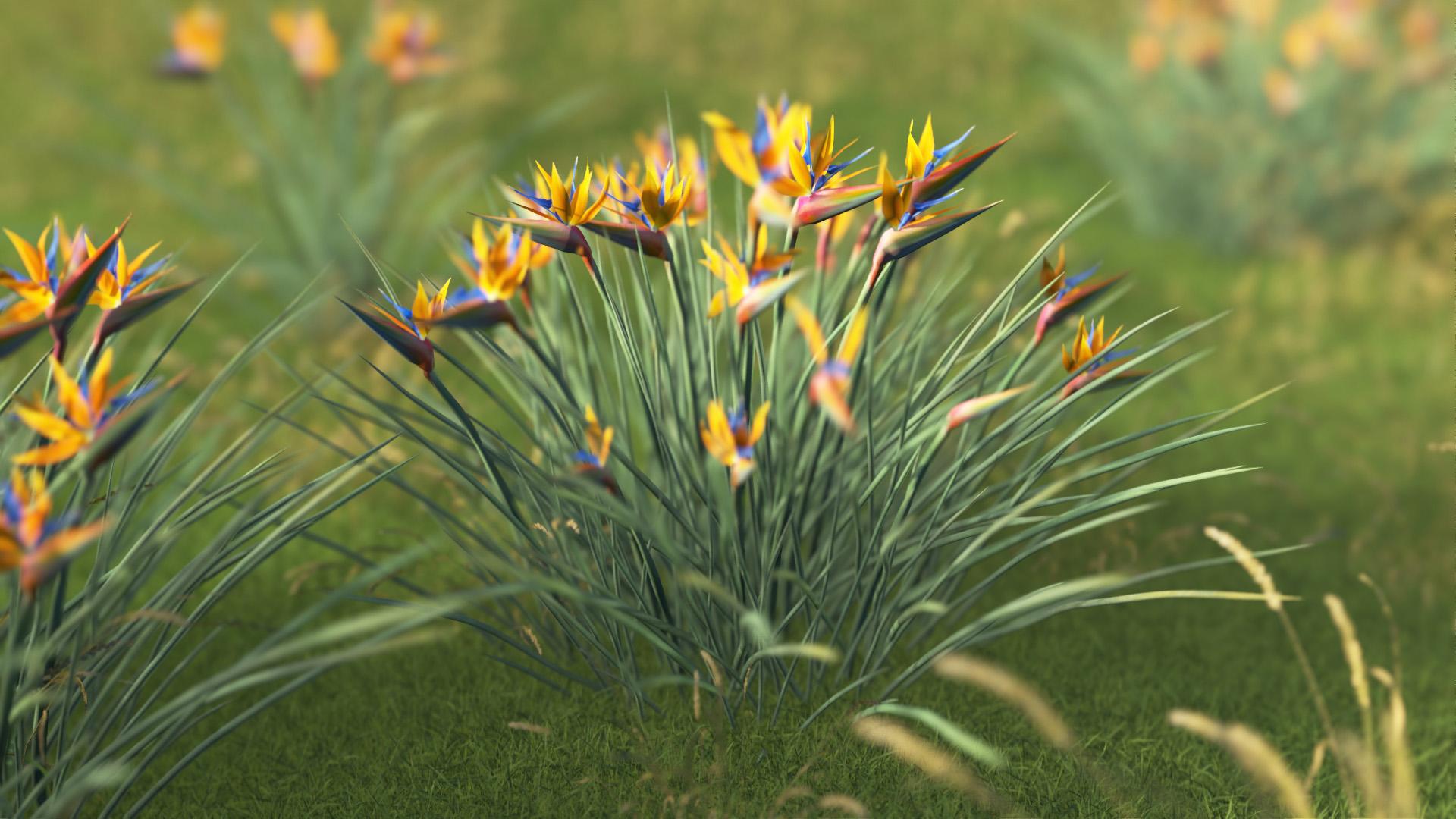 3D model of the Narrow leaved bird of paradise Strelitzia juncea close-up