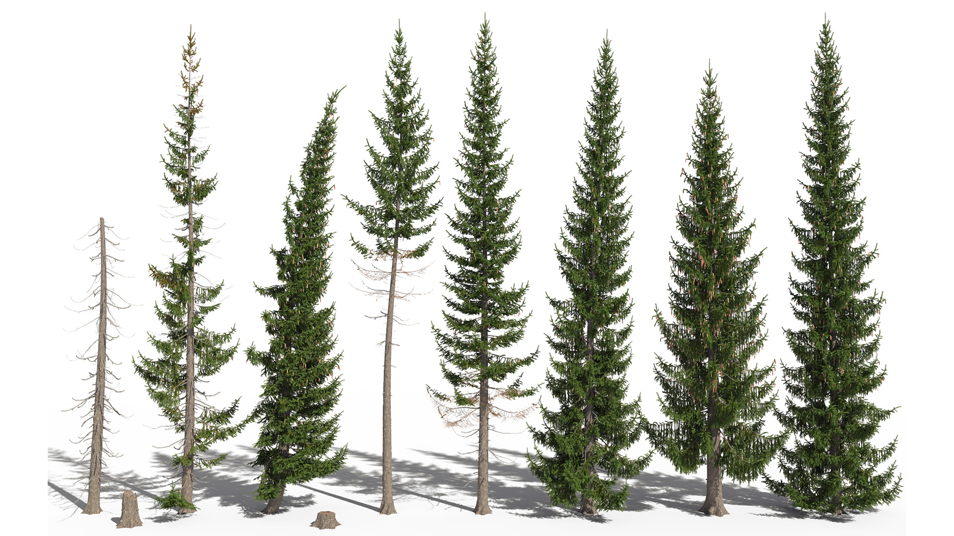3D model of the Norway spruce Picea abies different presets