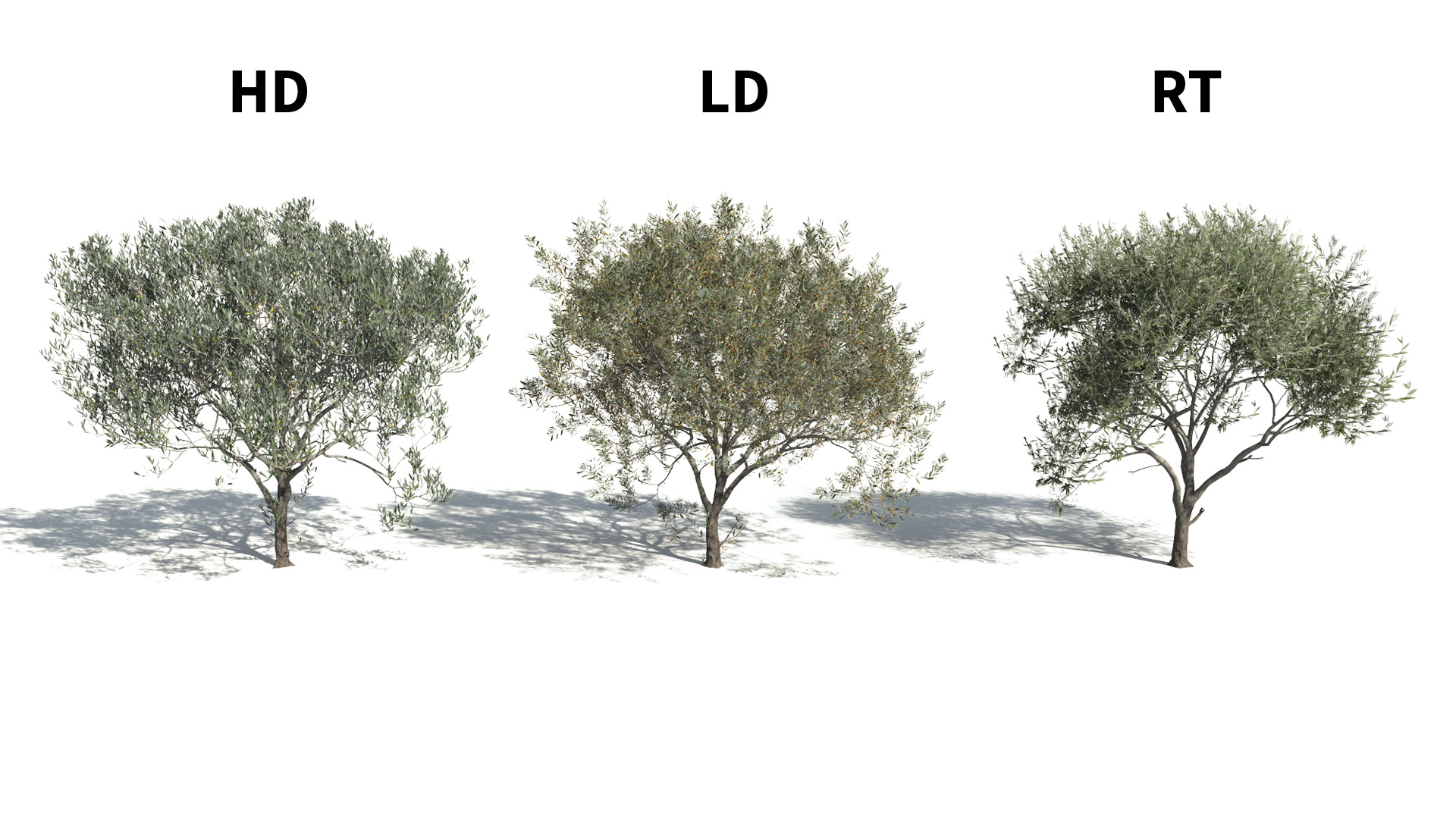 3D model of the Olive tree Olea europaea included versions