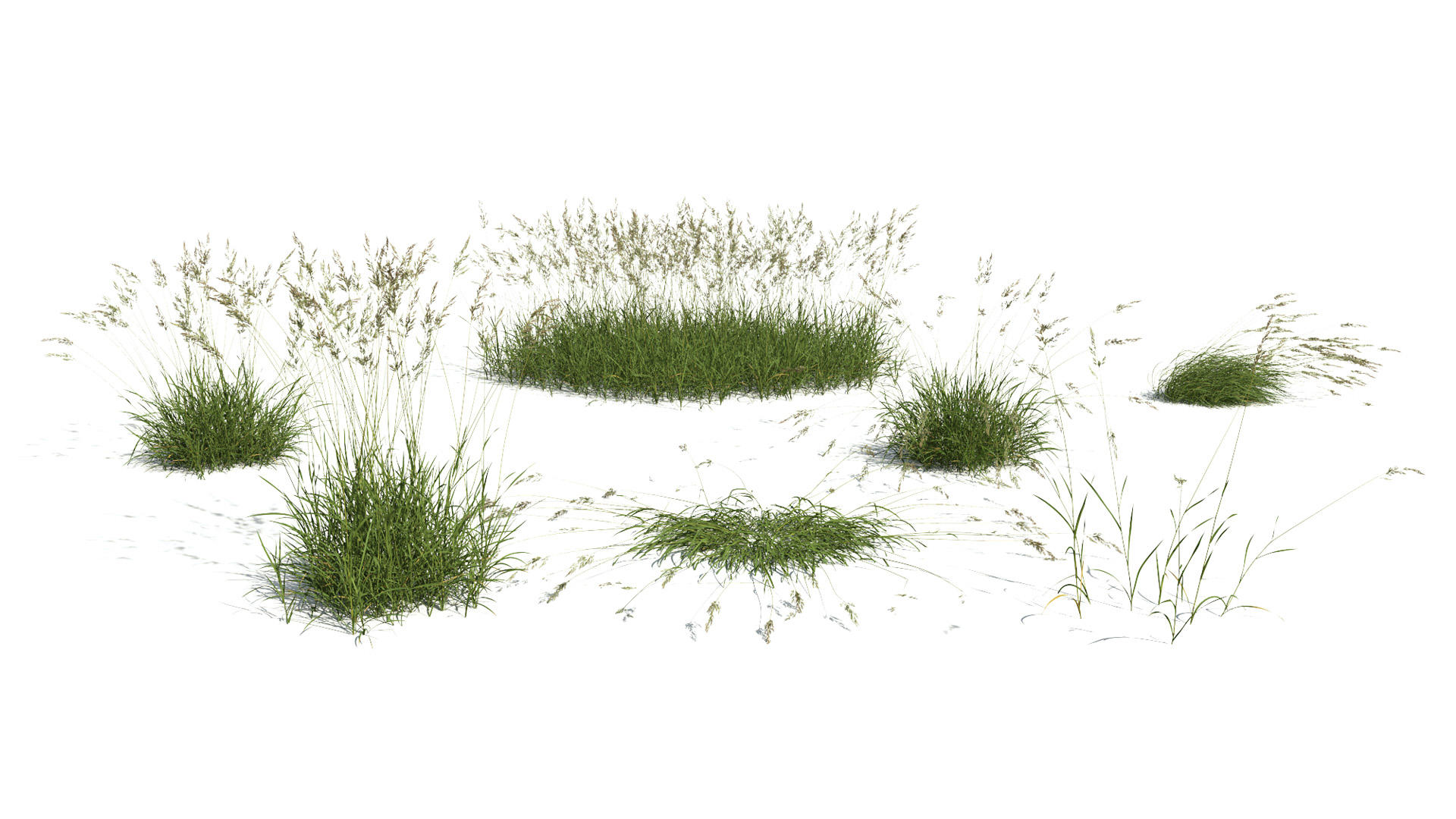 3D model of the Red fescue Festuca rubra published parameters