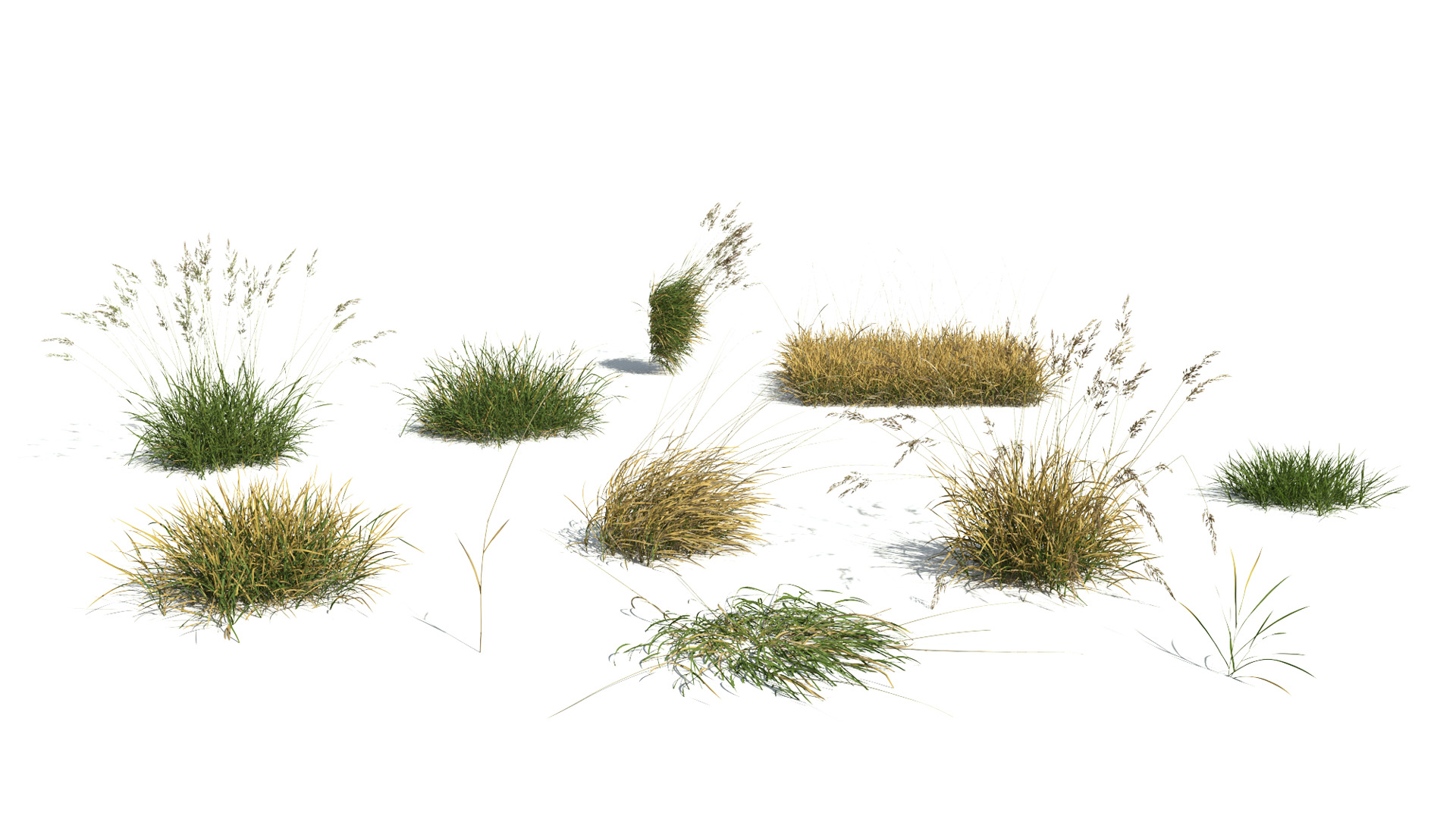 3D model of the Red fescue Festuca rubra different presets