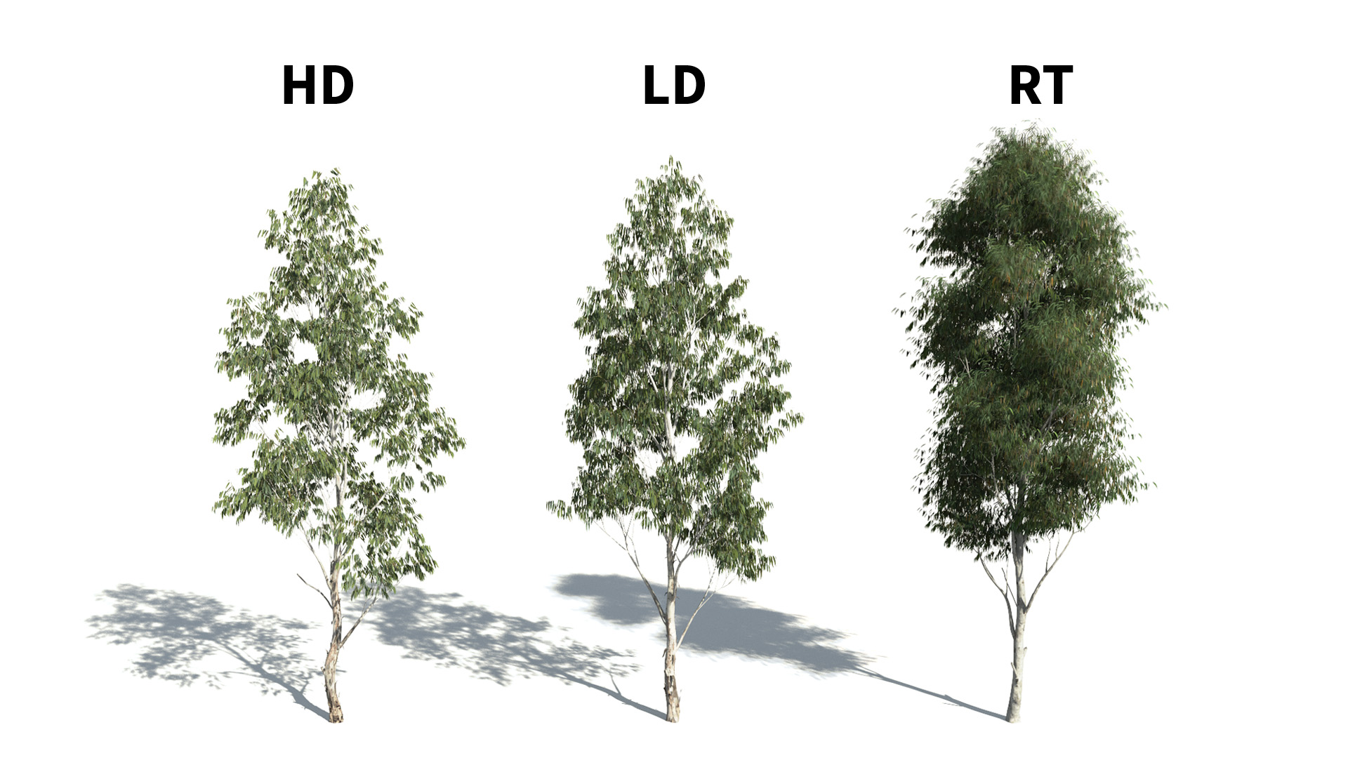 3D model of the Red river gum Eucalyptus camaldulensis included versions