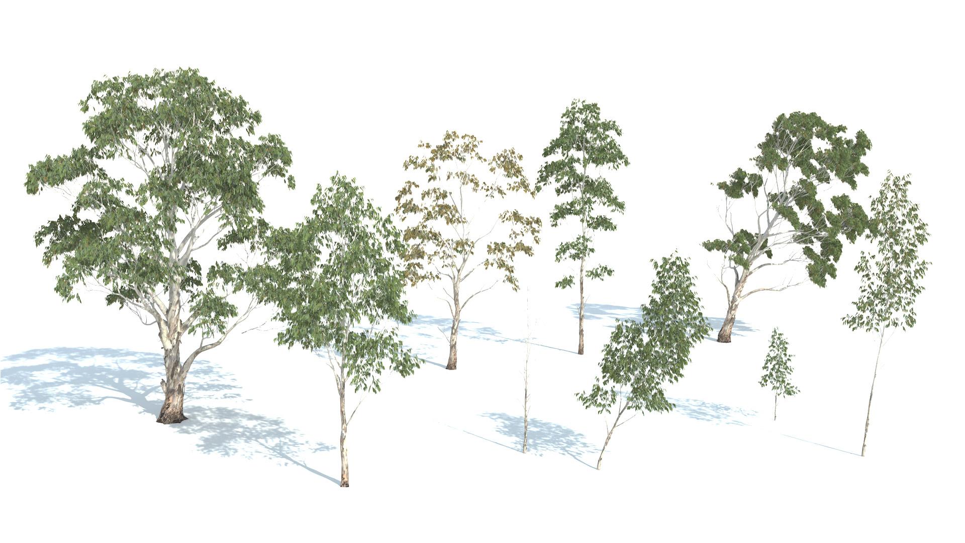 3D model of the Red river gum Eucalyptus camaldulensis different presets