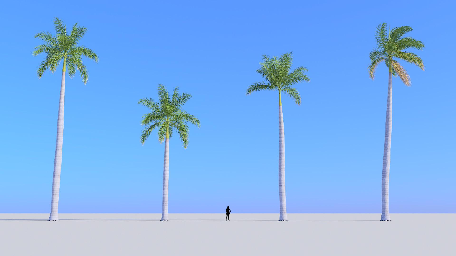 3D model of the Royal palm Roystonea regia