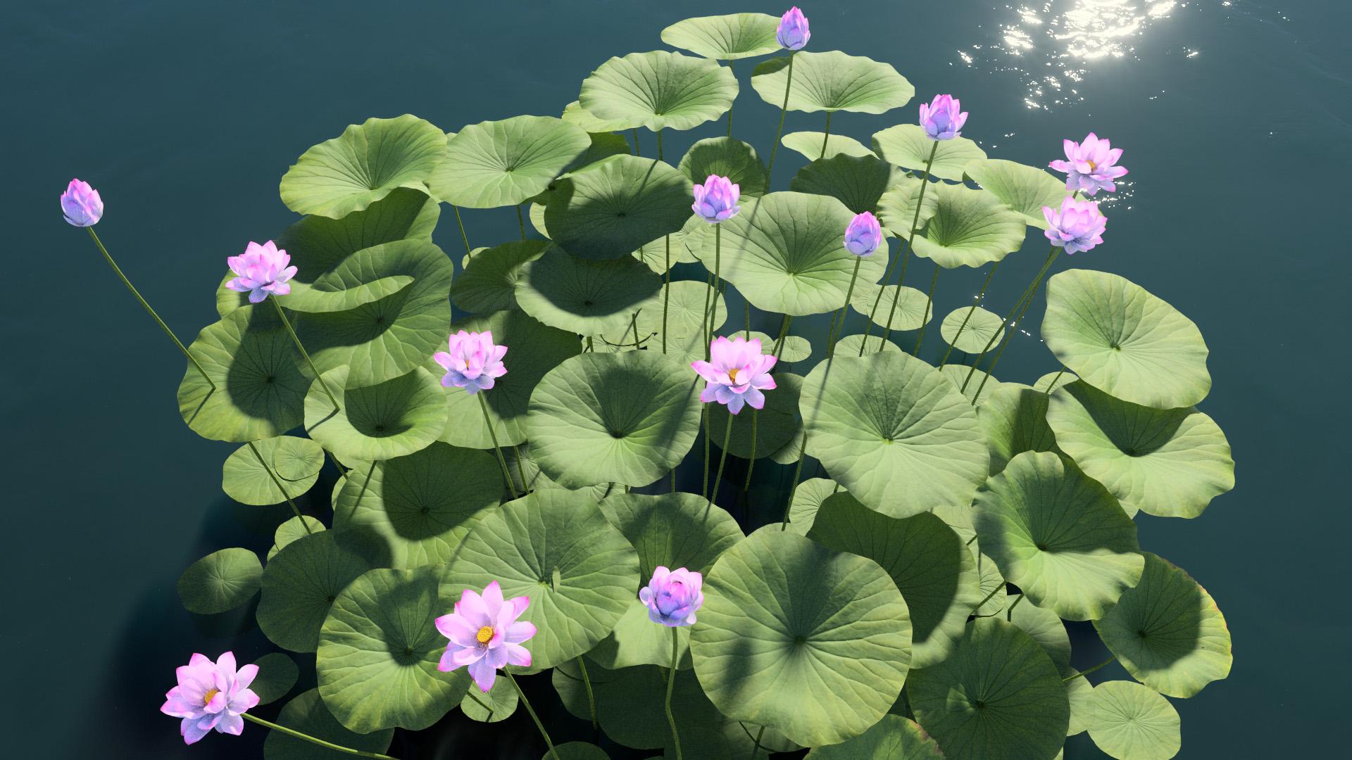 3D model of the Sacred lotus Nelumbo nucifera