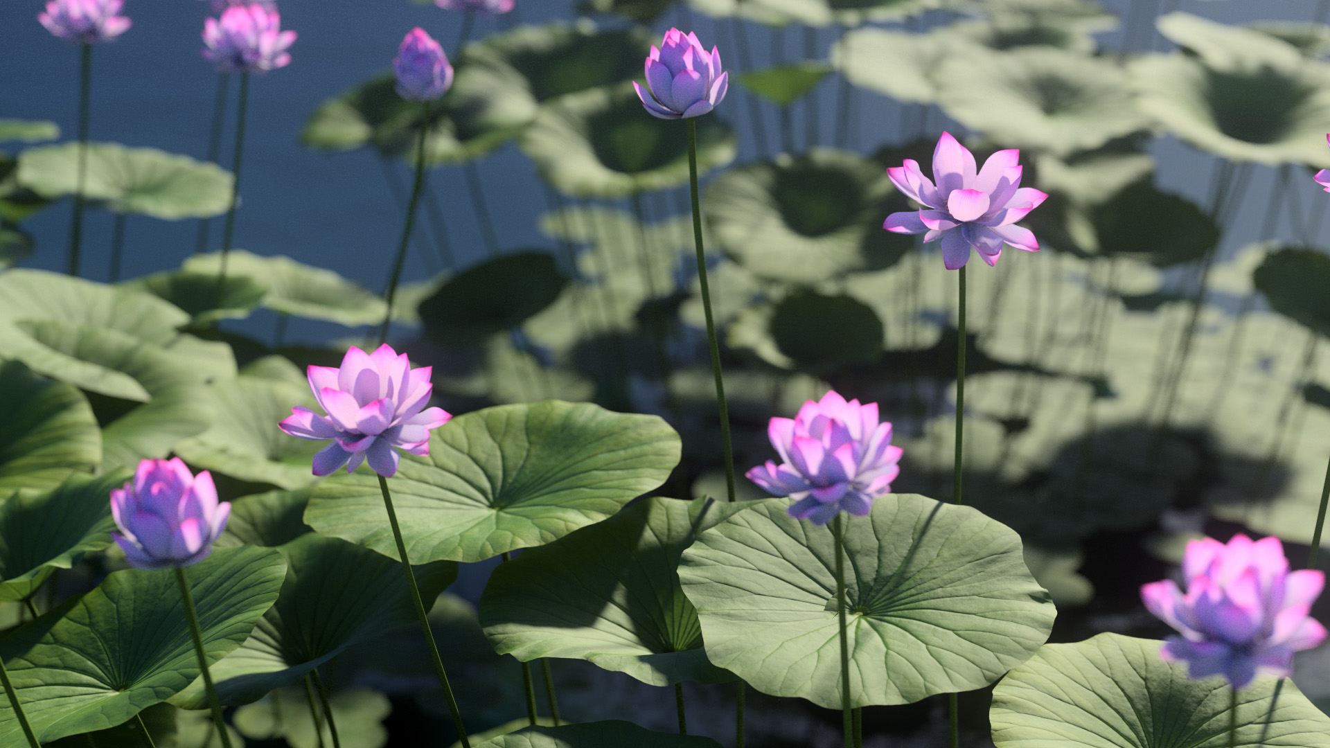 3D model of the Sacred lotus Nelumbo nucifera close-up