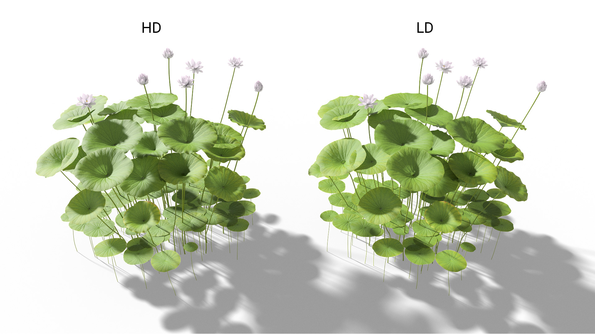 3D model of the Sacred lotus Nelumbo nucifera included versions