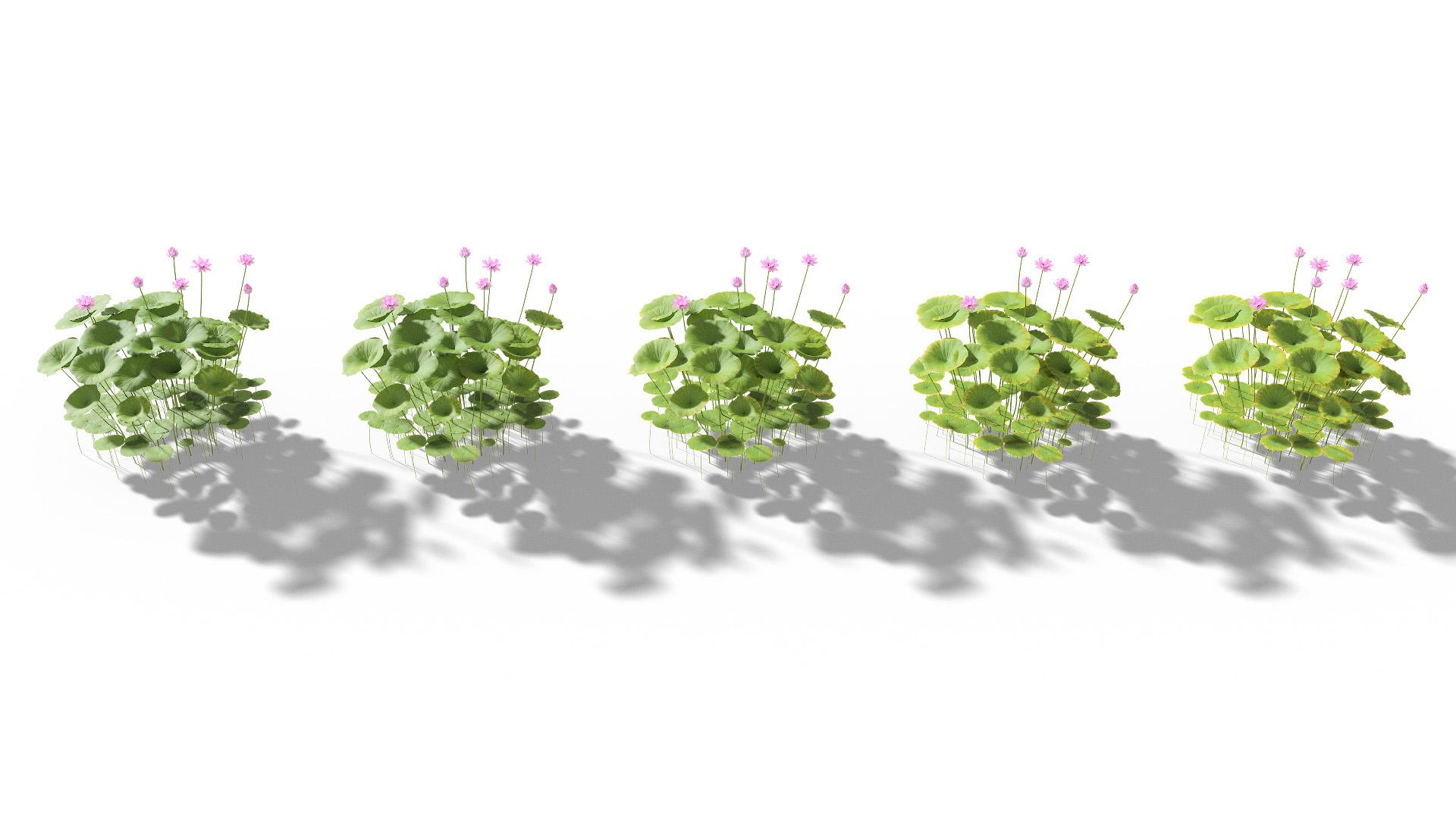 3D model of the Sacred lotus Nelumbo nucifera health variations