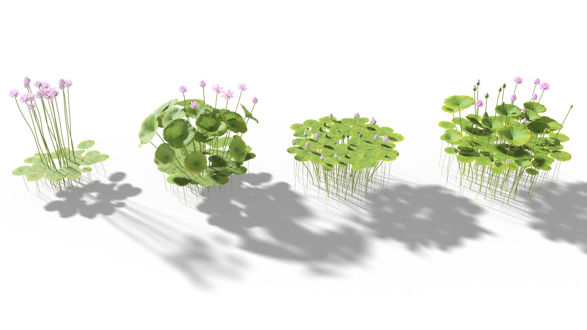 3D model of the Sacred lotus Nelumbo nucifera published parameters