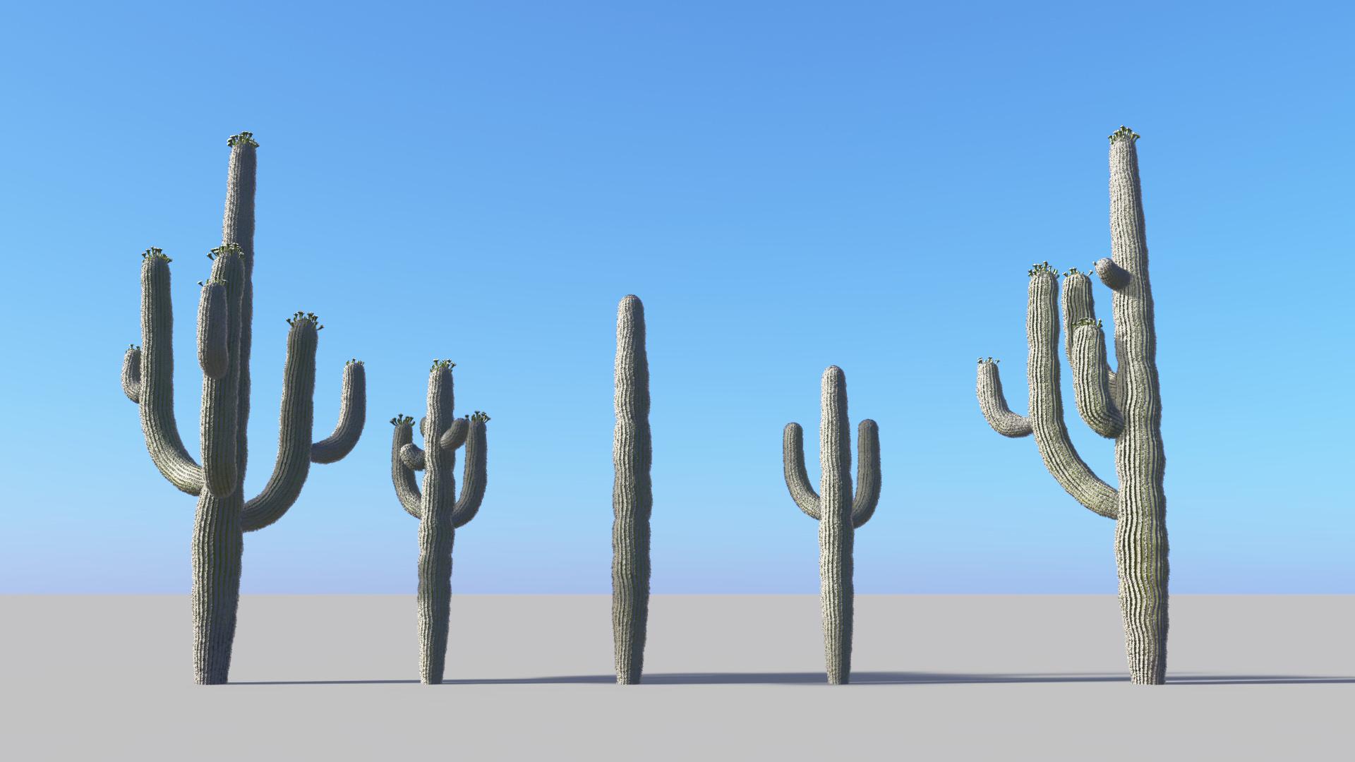 3D model of the Saguaro cactus Carnegiea gigantea