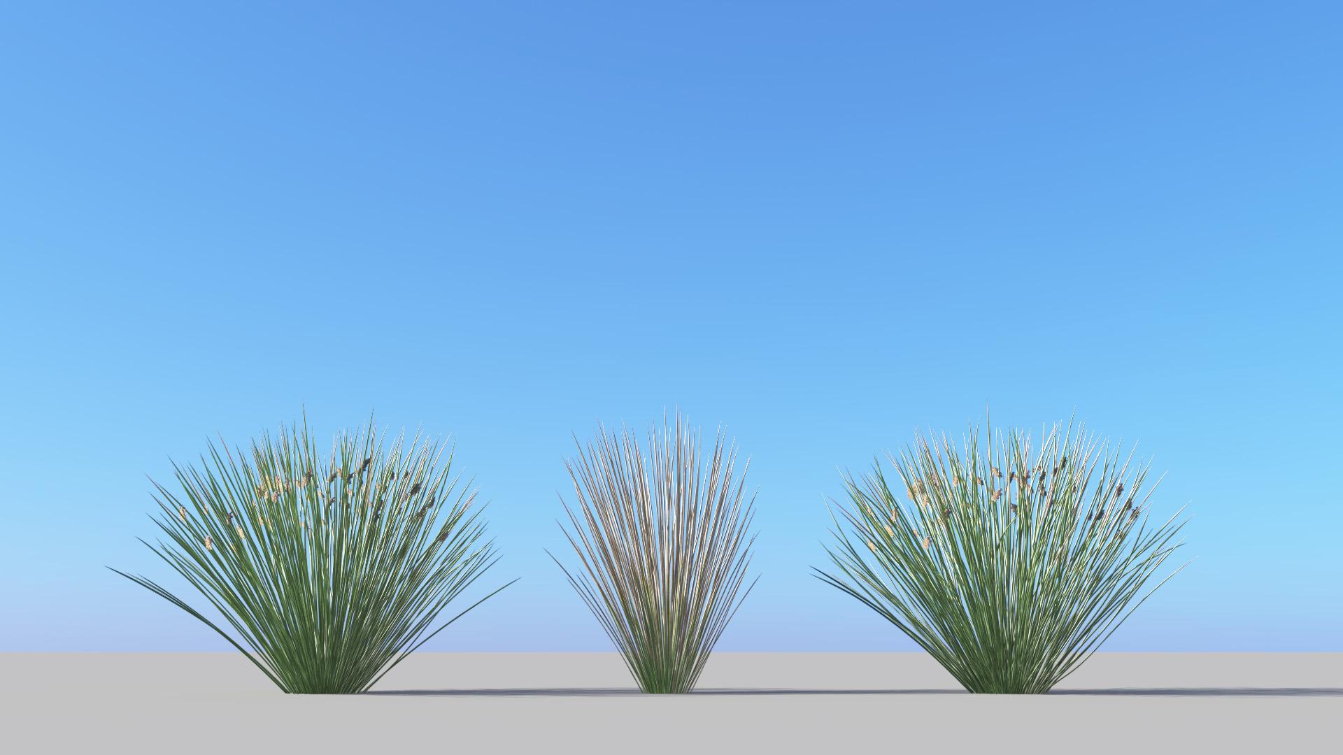 3D model of the Sea rush Juncus rigidus