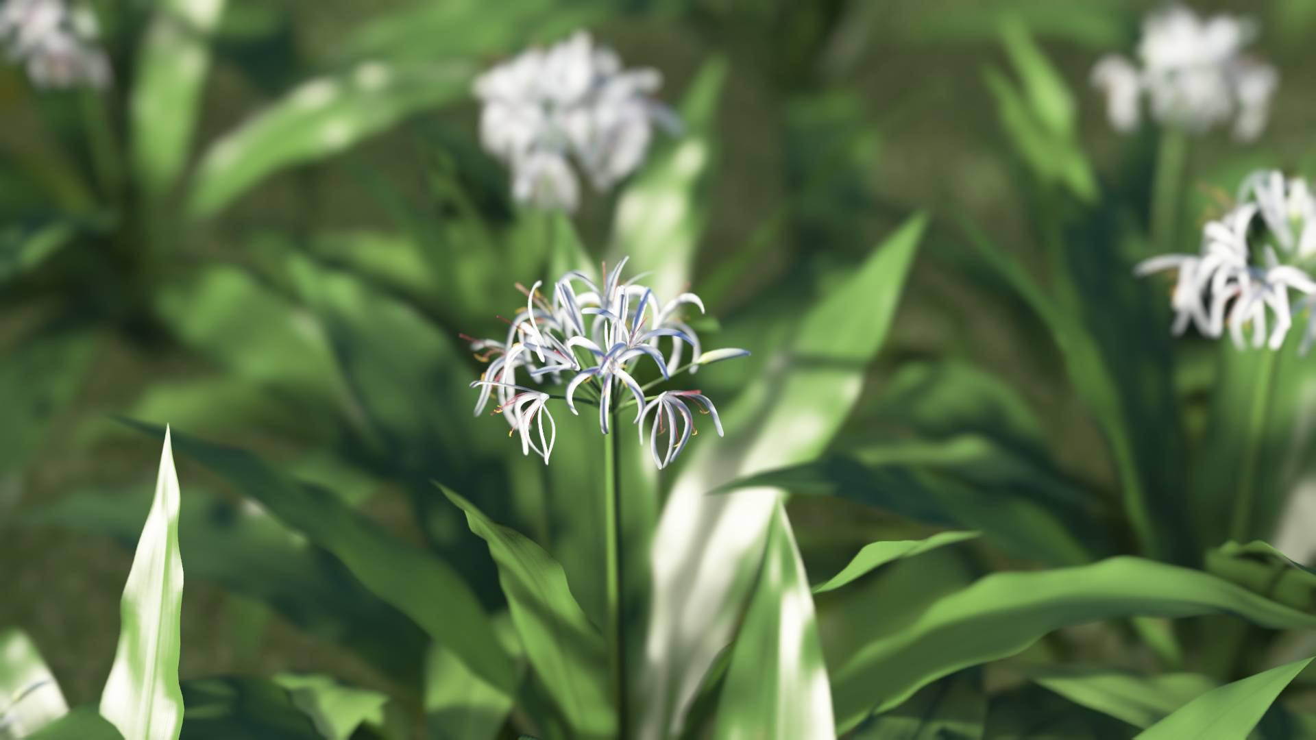 3D model of the Spider lily Crinum asiaticum close-up