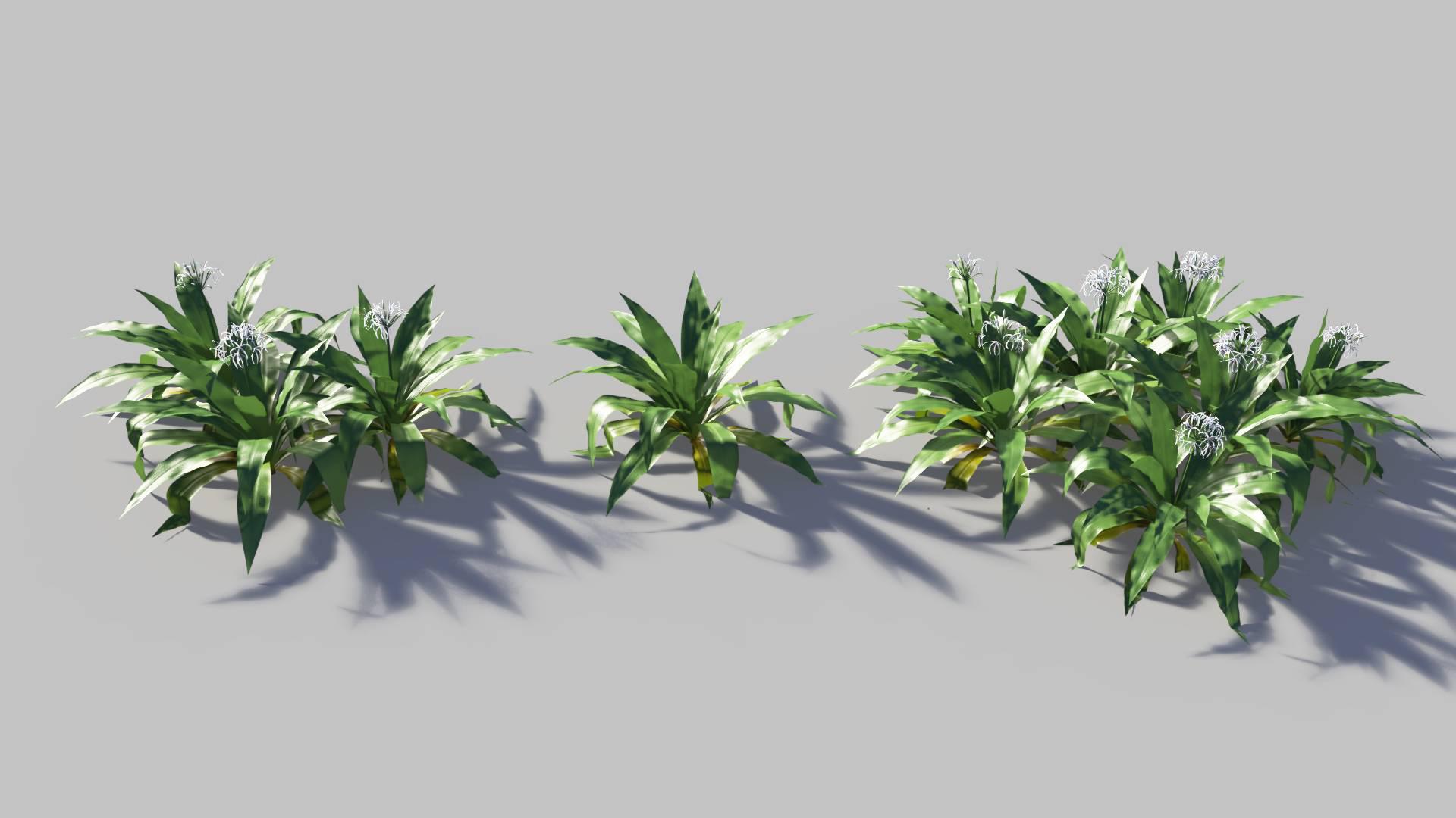 3D model of the Spider lily Crinum asiaticum